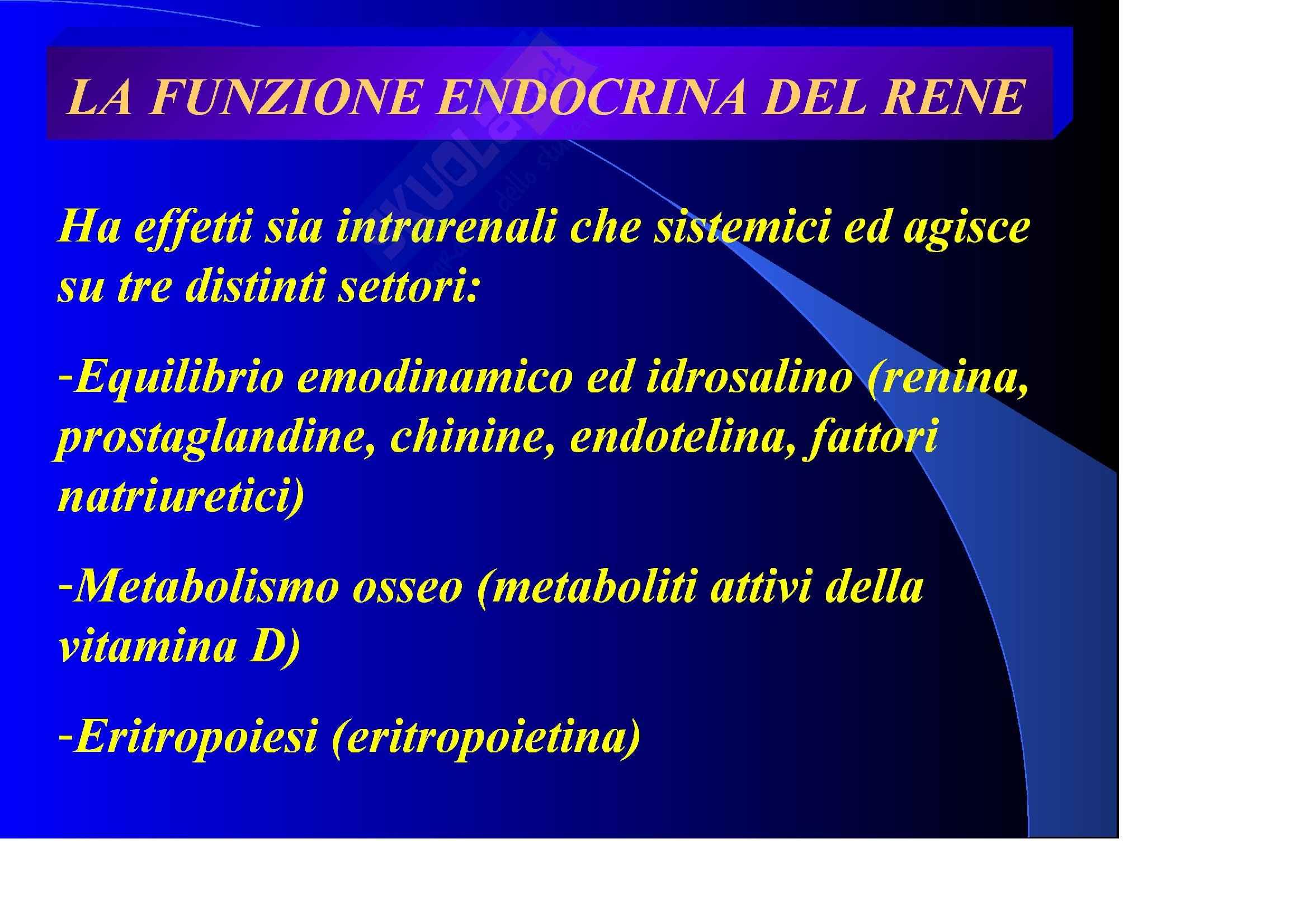 Nefrologia e urologia – Funzione endocrina