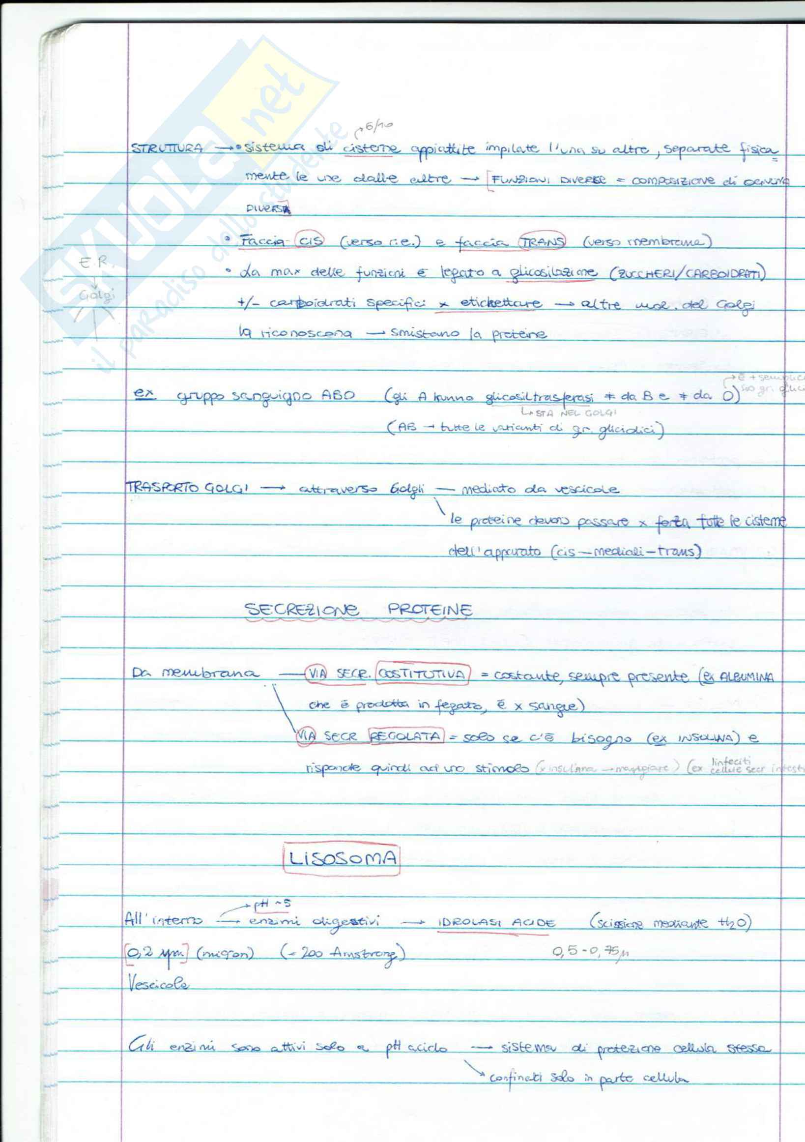 biologia cellulare Pag. 26