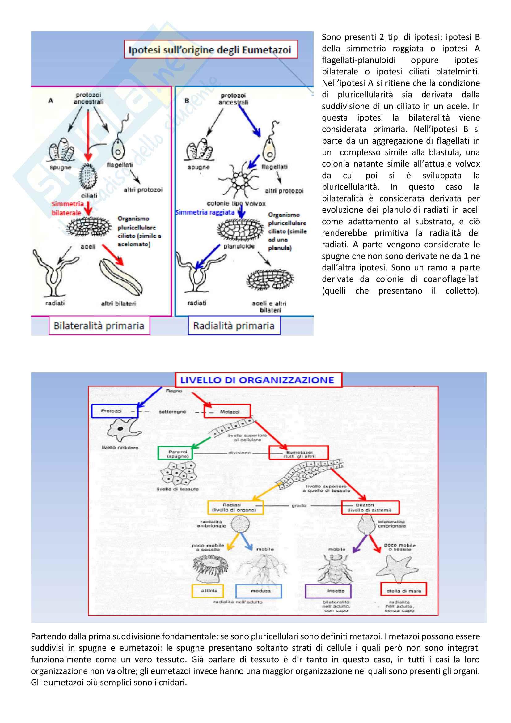 Biomeccanica pdf Pag. 26