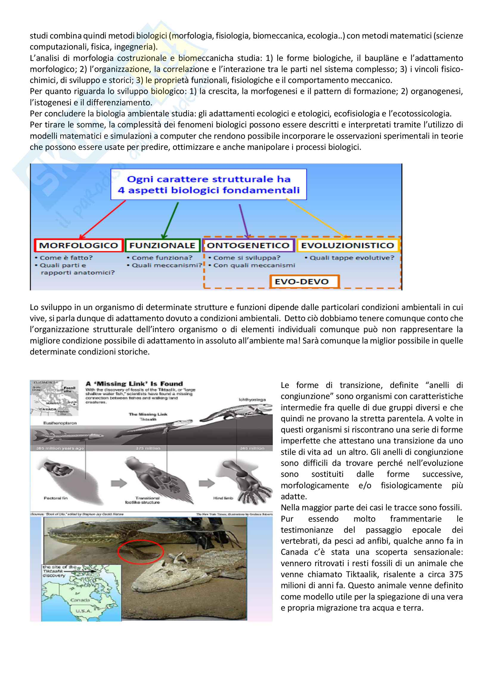 Biomeccanica pdf Pag. 6