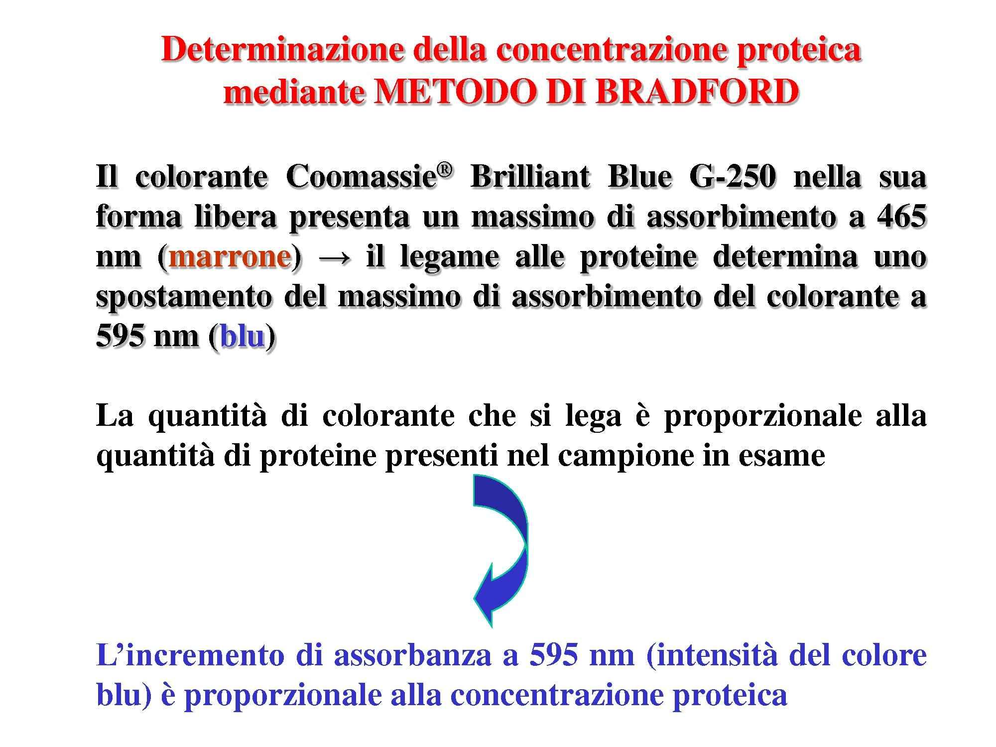 Determinazione concentrazione proteine- Metodo di Bradford