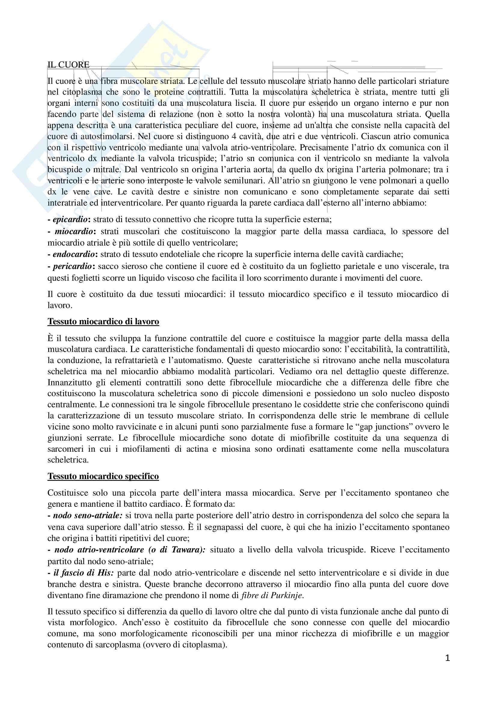 Riassunto esame Fisiologia, prof. Dante, libro consigliato Fisiologia Umana, Silverthon