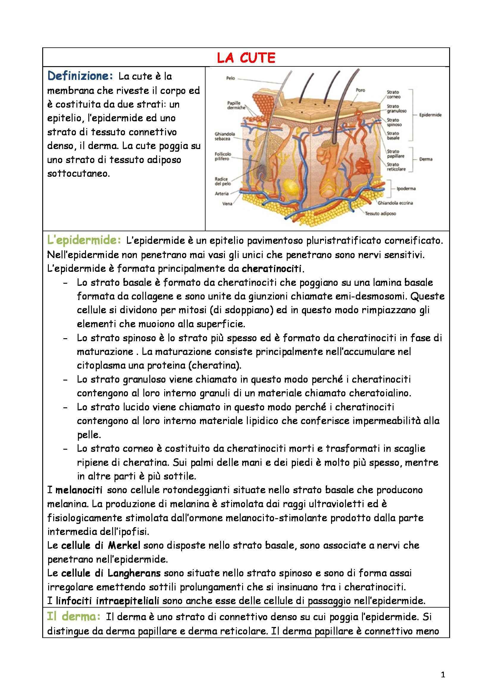 Riassunto esame Anatomia e istologia, prof. Fabene, libro consigliato Anatomia umana normale, Sbarbati