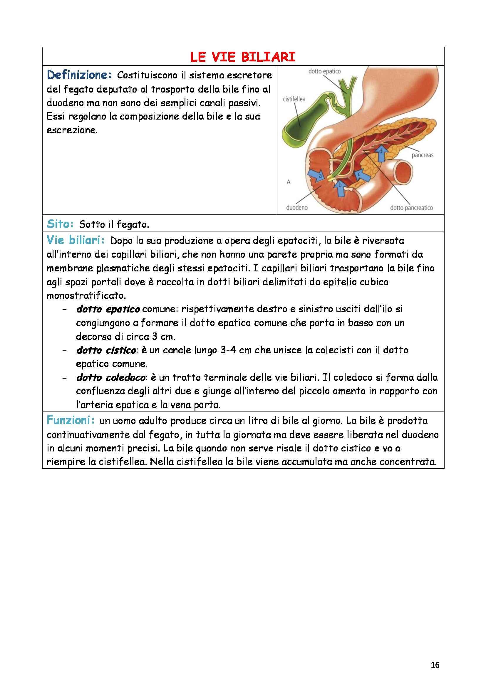 Riassunto esame Anatomia e istologia, prof. Fabene, libro consigliato Anatomia umana normale, Sbarbati Pag. 16