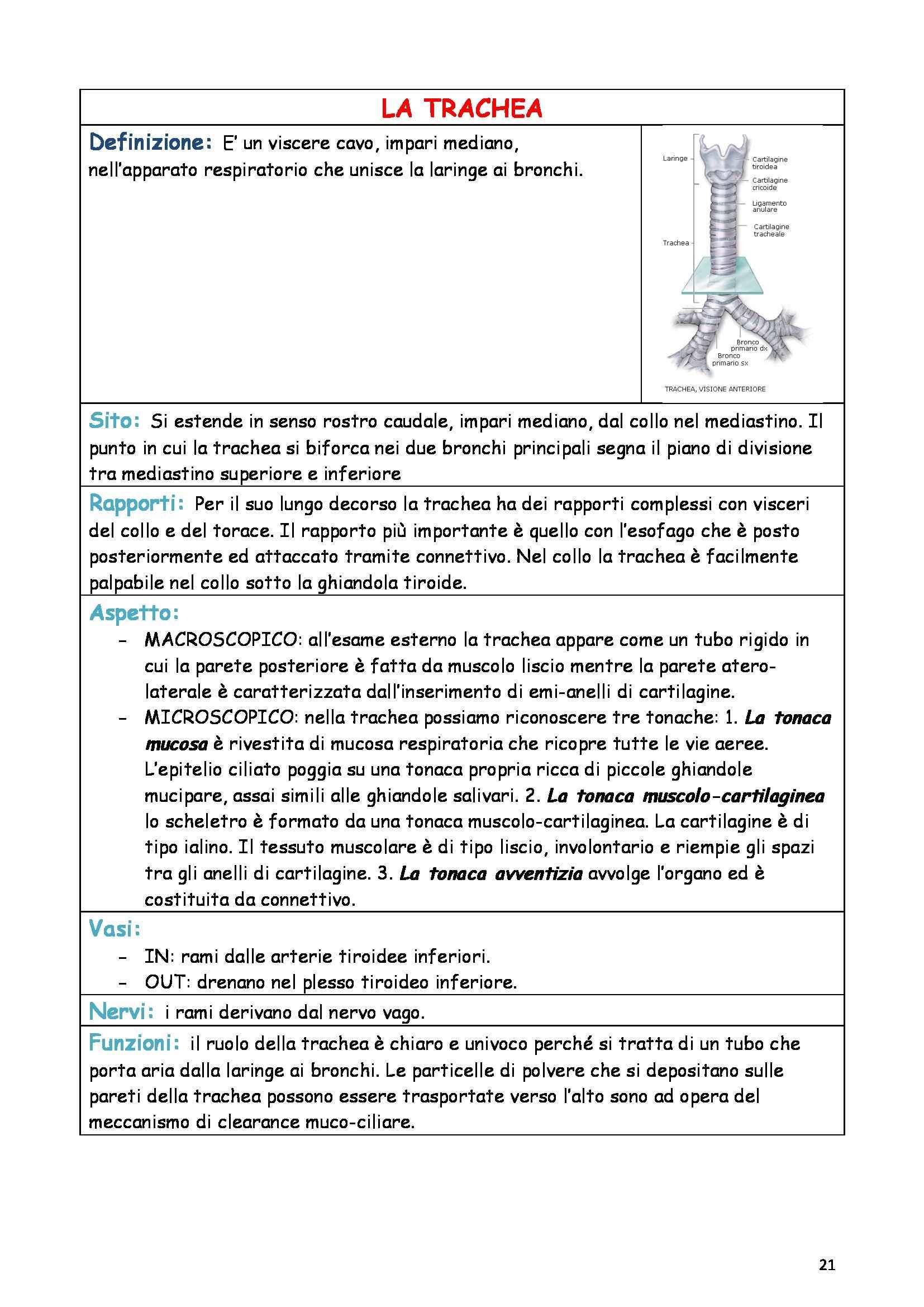 Riassunto esame Anatomia e istologia, prof. Fabene, libro consigliato Anatomia umana normale, Sbarbati Pag. 21