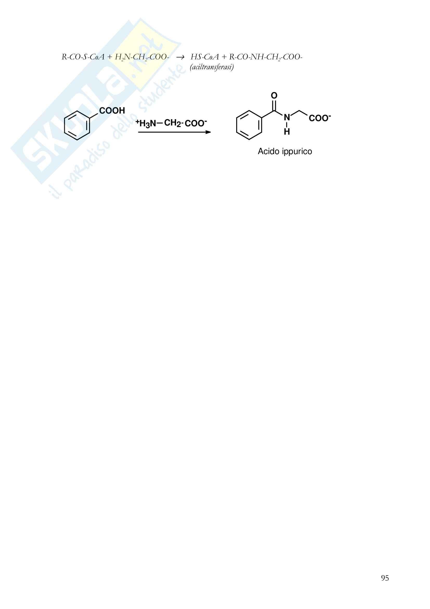 Farmacologia generale - metabolismo epatico dei farmaci Pag. 21