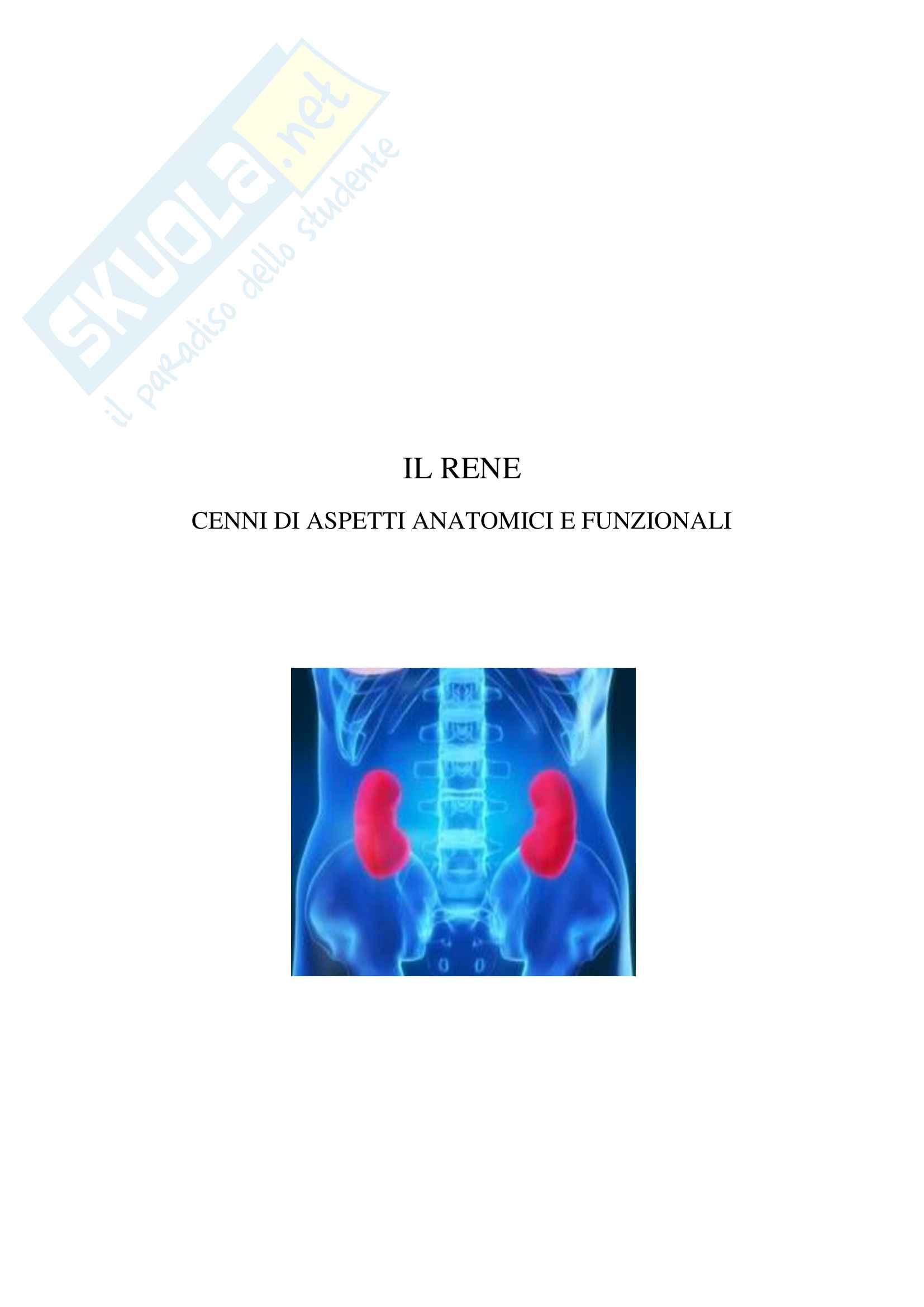 IL rene cenni e apetti anatomici e funzionali