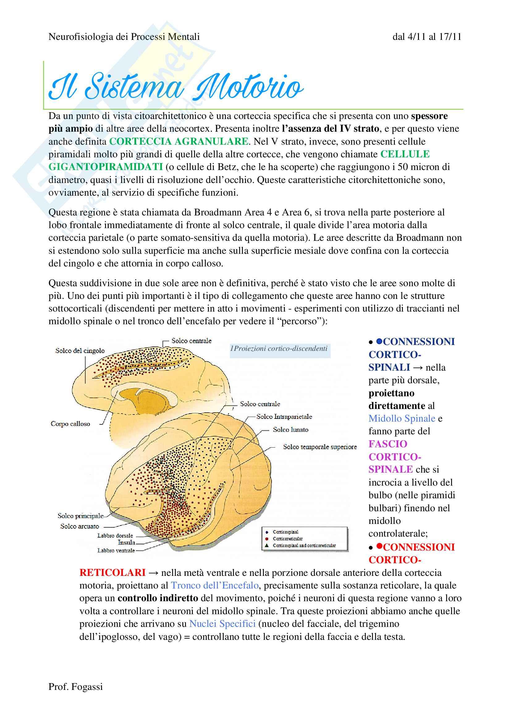 appunto L. Fogassi Neurofisiologia dei processi mentali