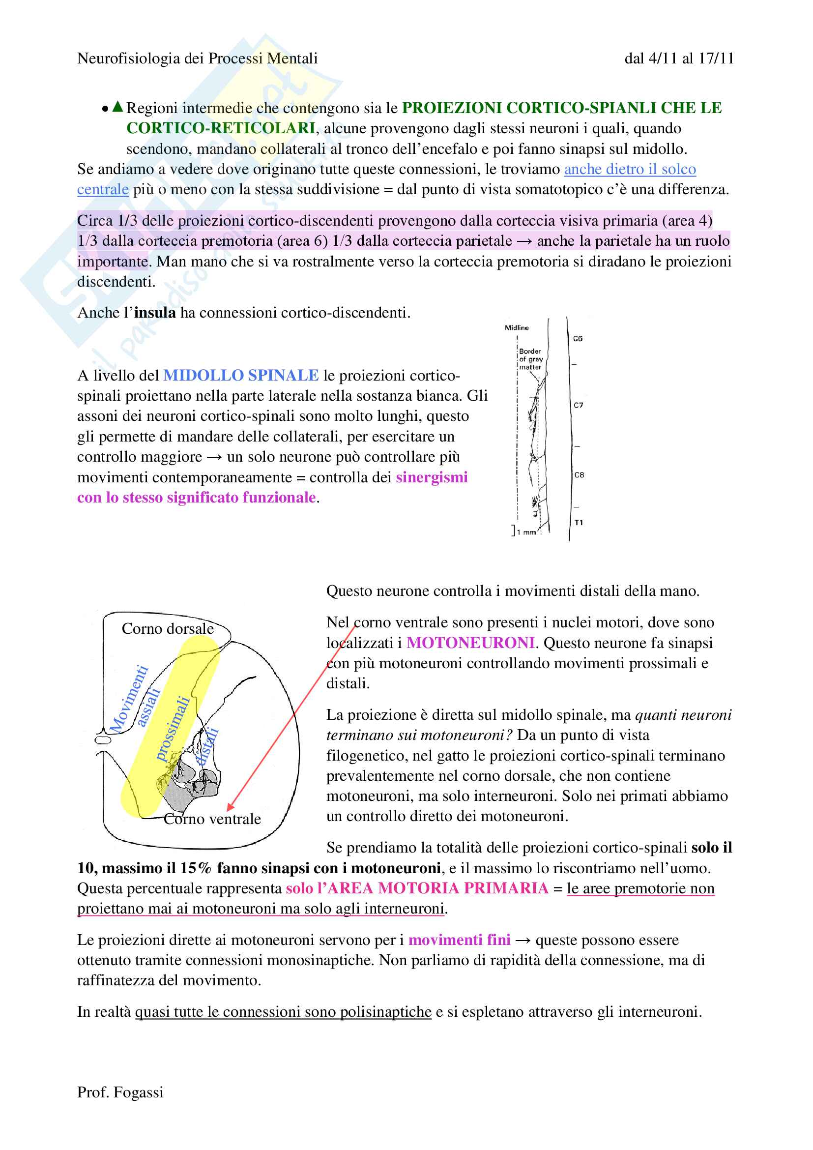 Il Sistema motorio Pag. 2