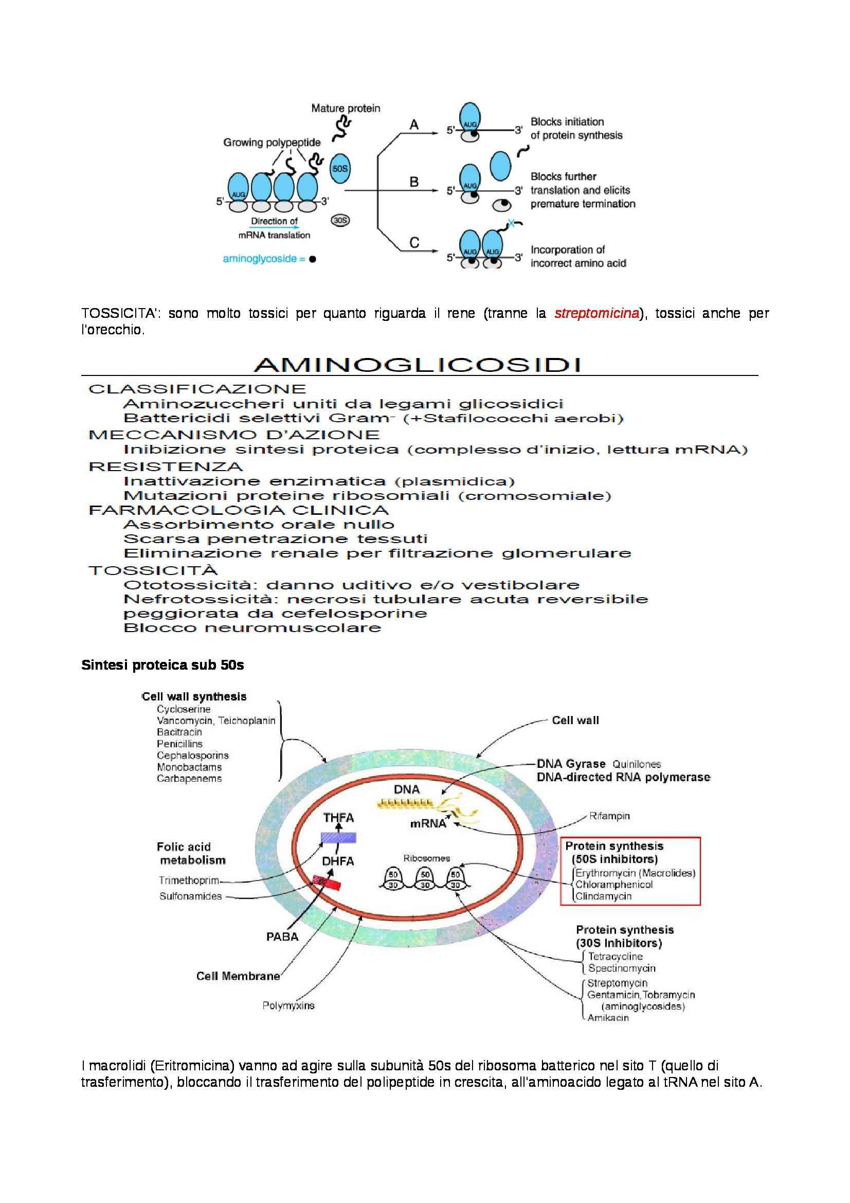 Farmacologia - antimicrobici Pag. 6