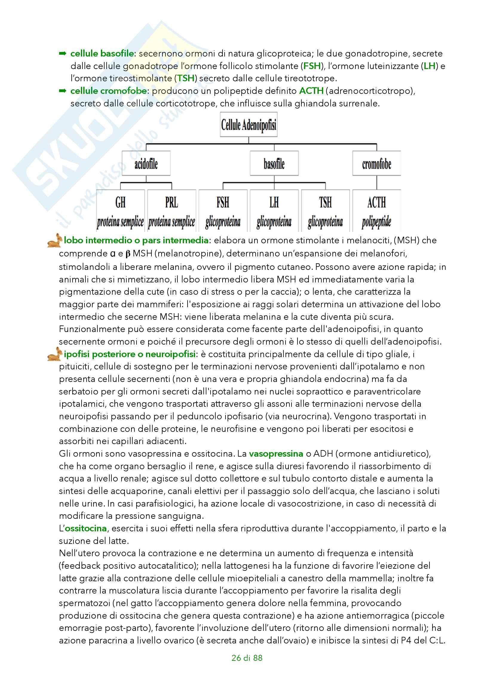 Fisiologia degli animali domestici Pag. 26