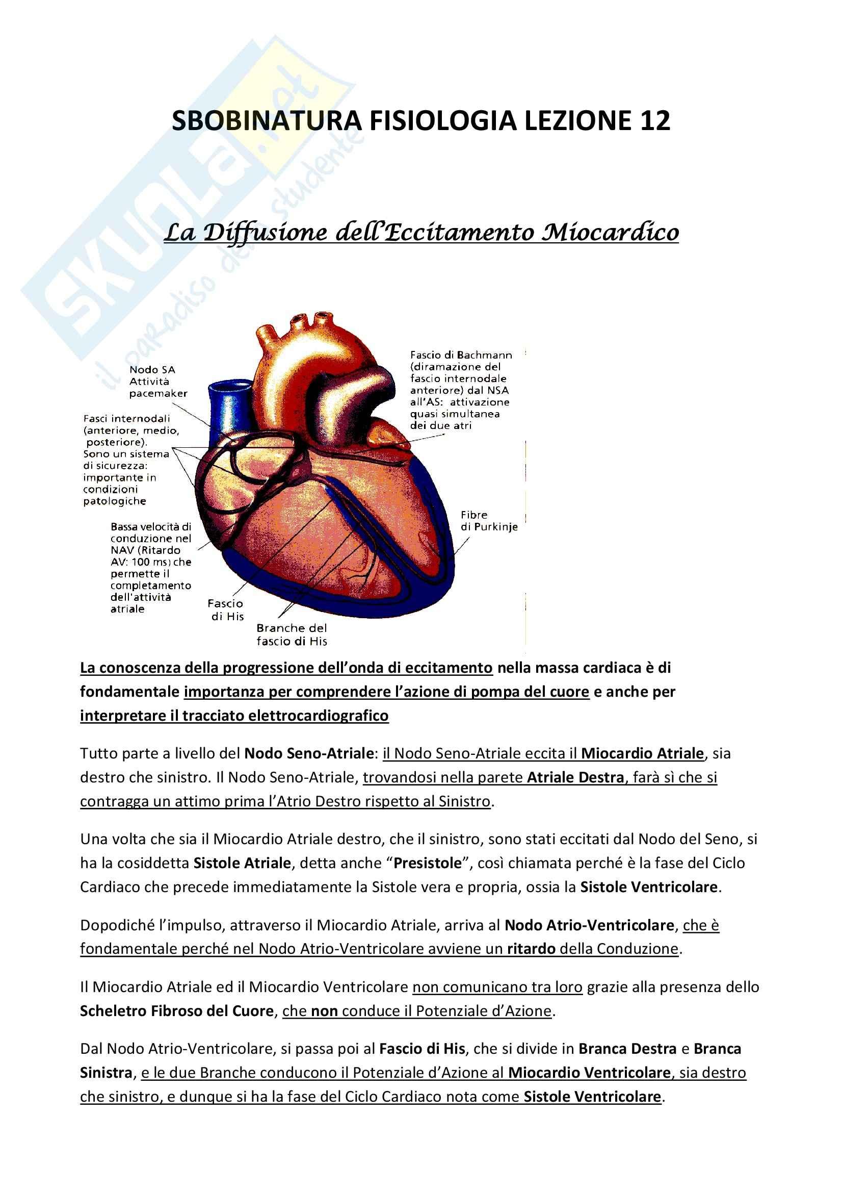 Fisiologia umana I - eccitamento cardiaco