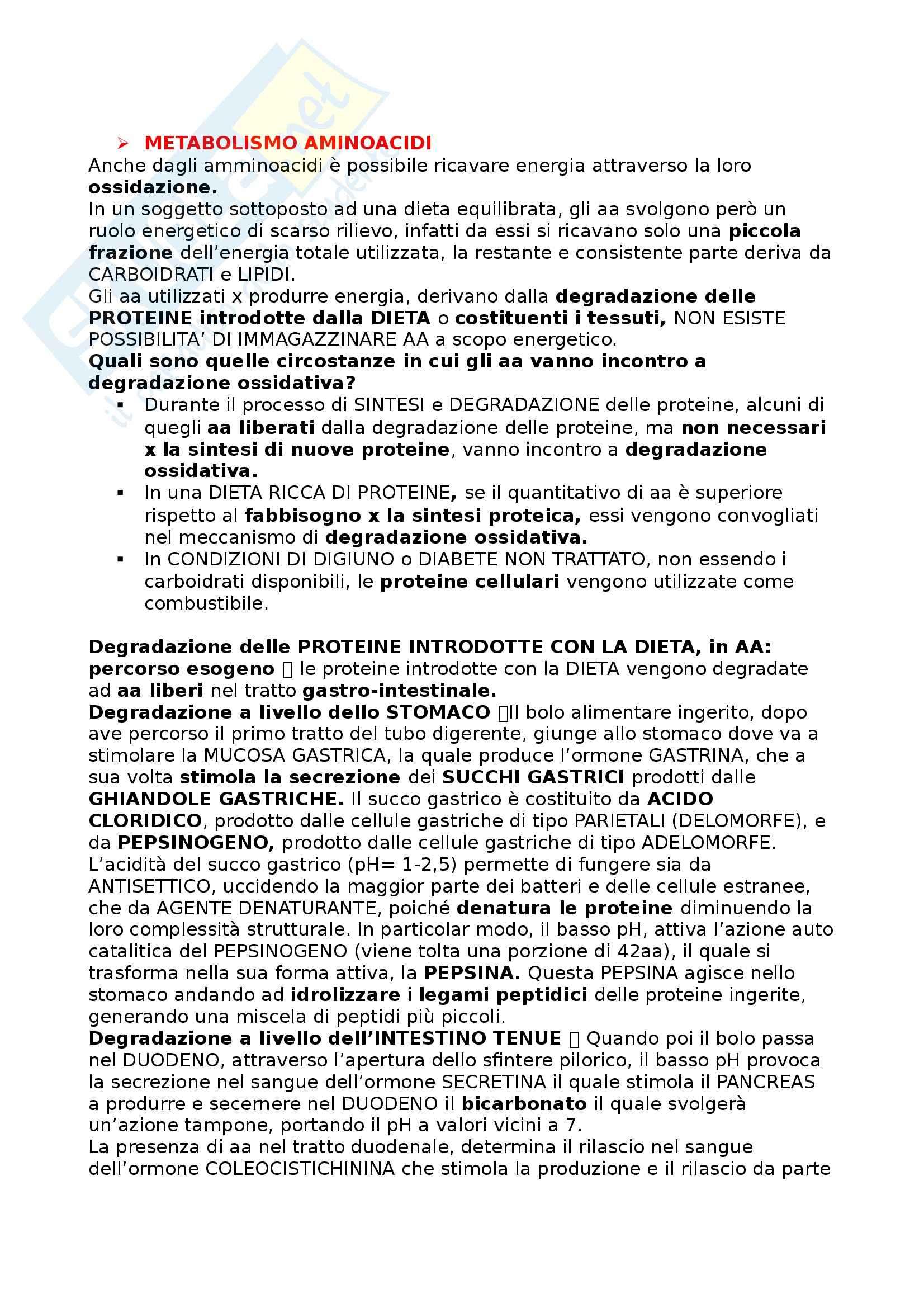 Biochimica II - Appunti Pag. 26