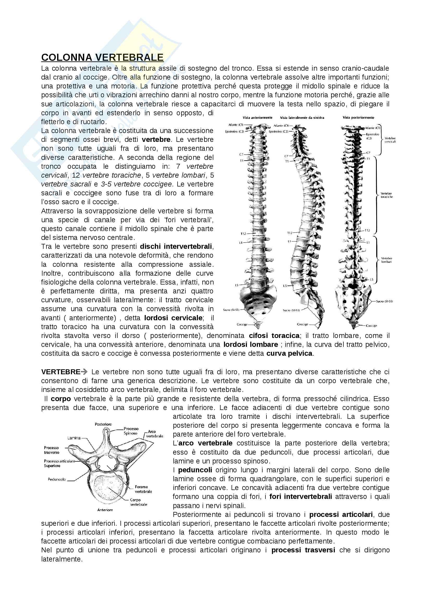 Anatomia dell'apparato locomotore - Colonna vertebrale, Arto Inferiore, Arto superiore