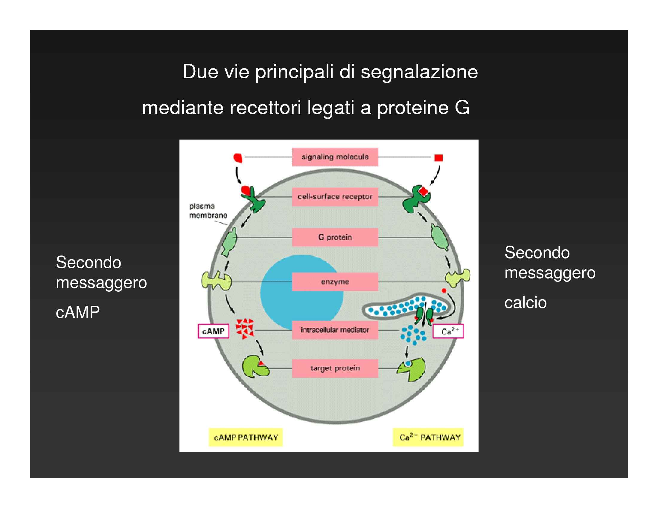 Sistemi di adesione tra cellule