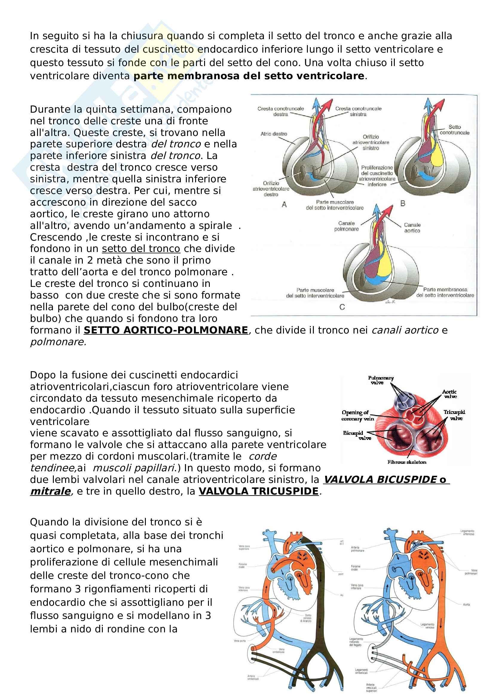 Sviluppo apparato circolatorio - Riassunto esame Embriologia, prof. Canipari, libro consigliato De felici Pag. 6