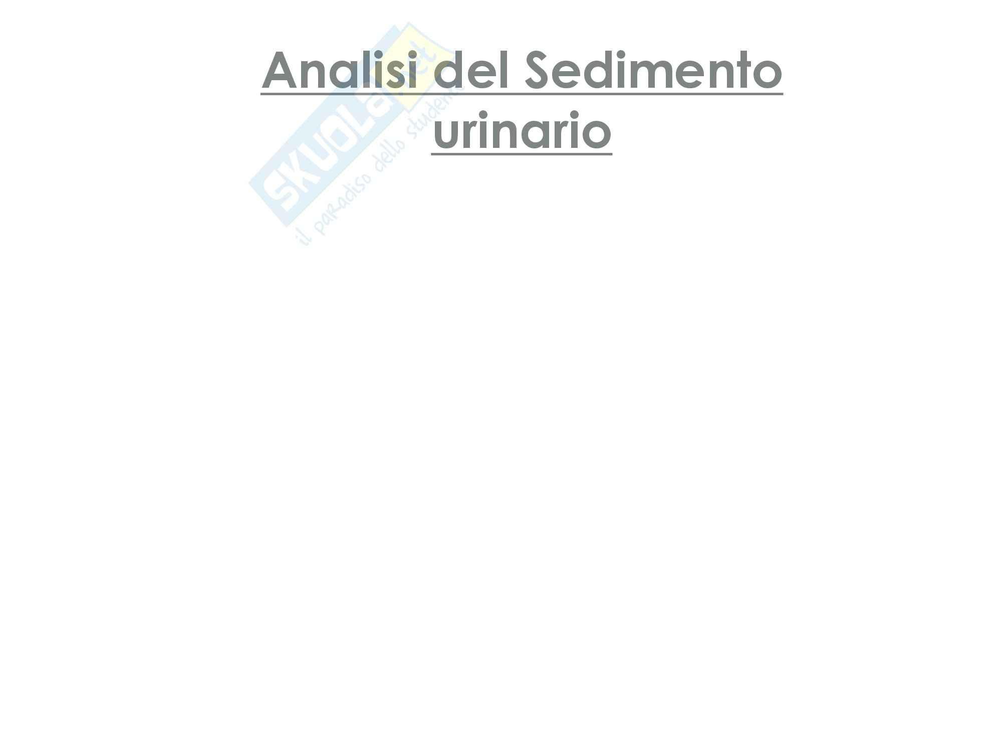 Il sedimento urinario
