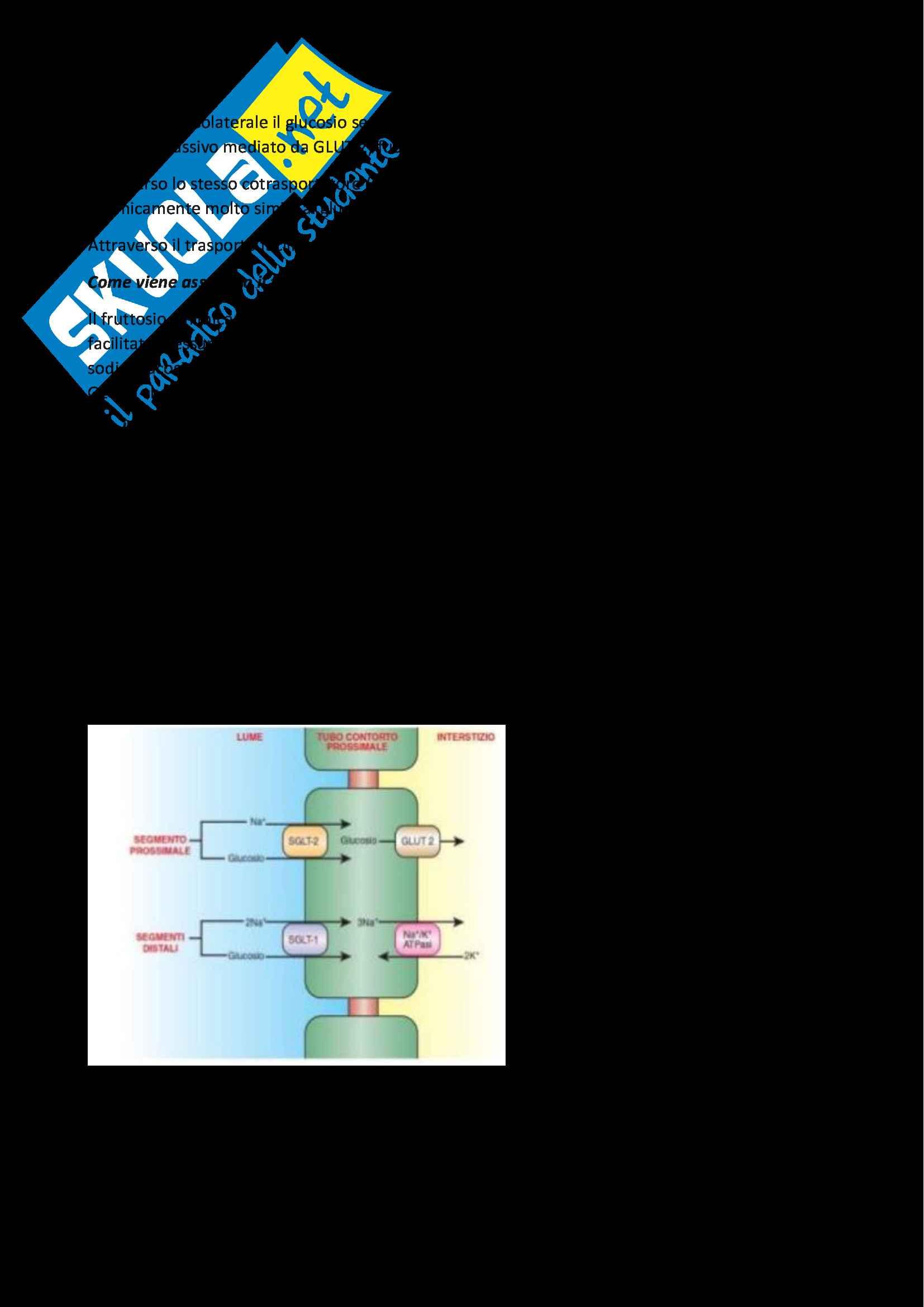 Fisiologia Generale, appunti su trasporti di membrana, trasporto epiteliale, sistema nervoso centrale e periferico, fisiologia del muscolo Pag. 36