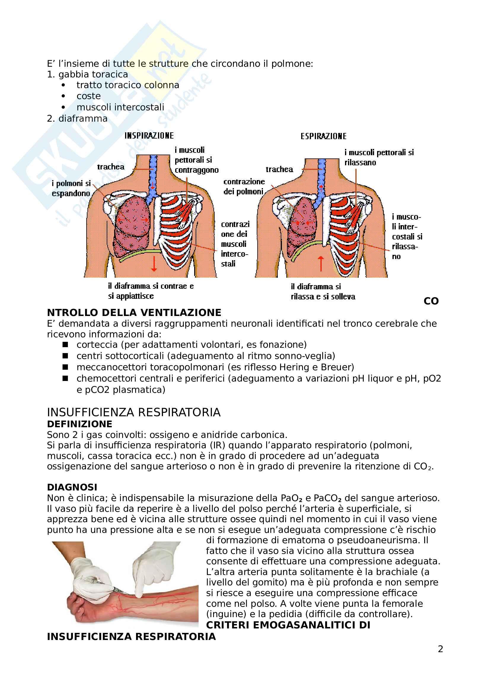 Apparato respiratorio Pag. 2
