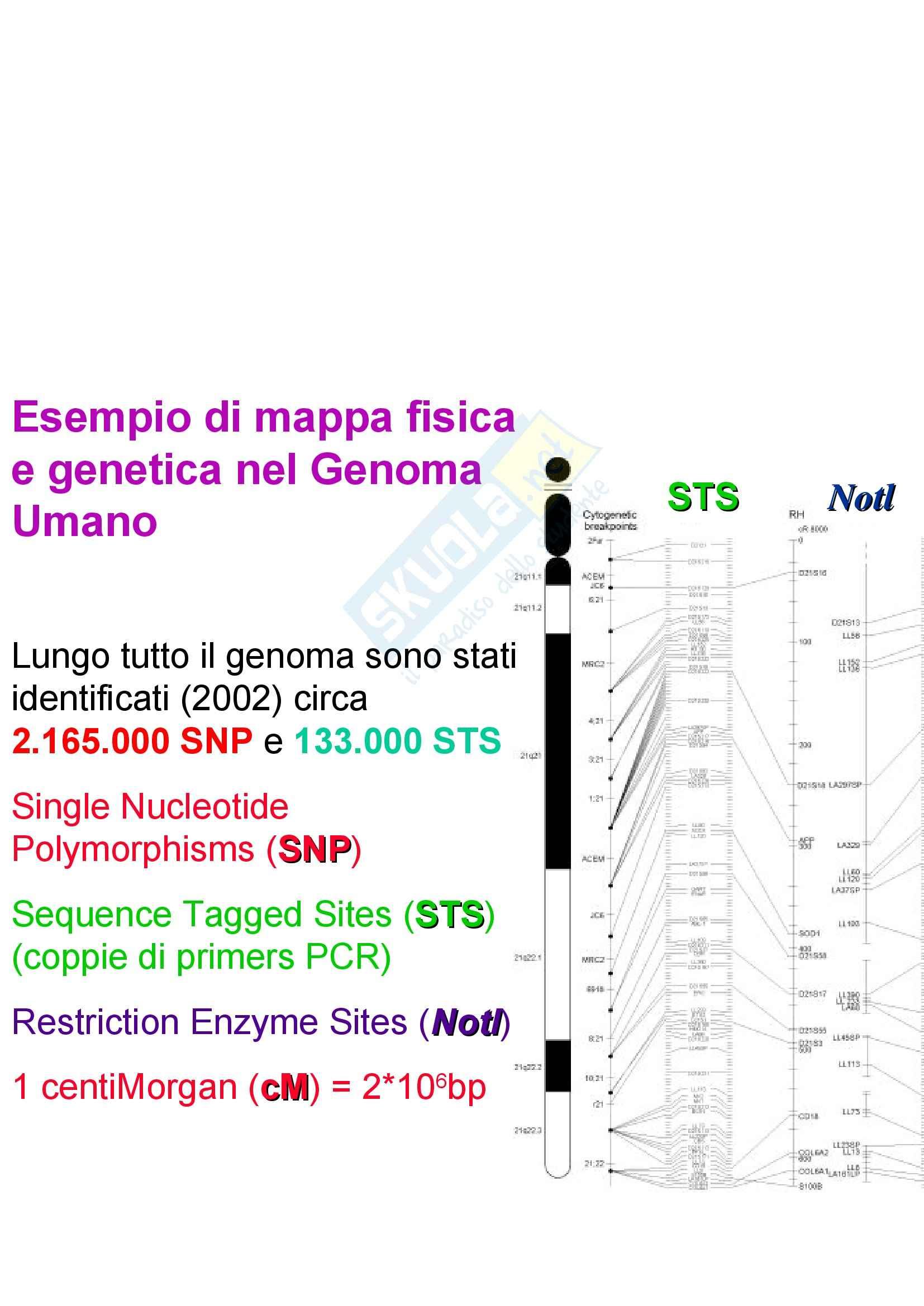 Basi biologiche e genetica umana - manipolazione del DNA Pag. 36