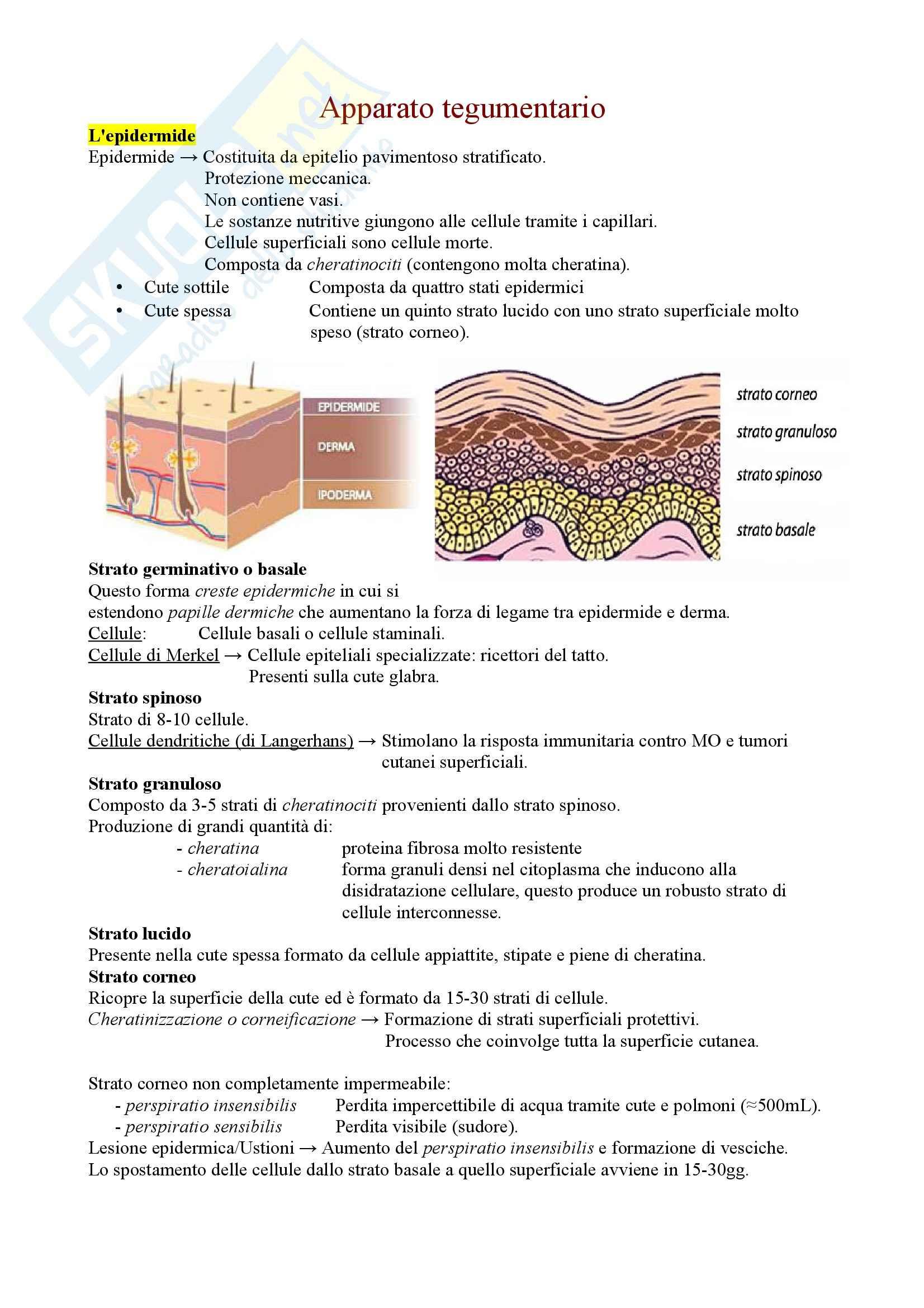 Anatomia e fisiologia  - Apparato tegumentario e Ghiandole mammarie