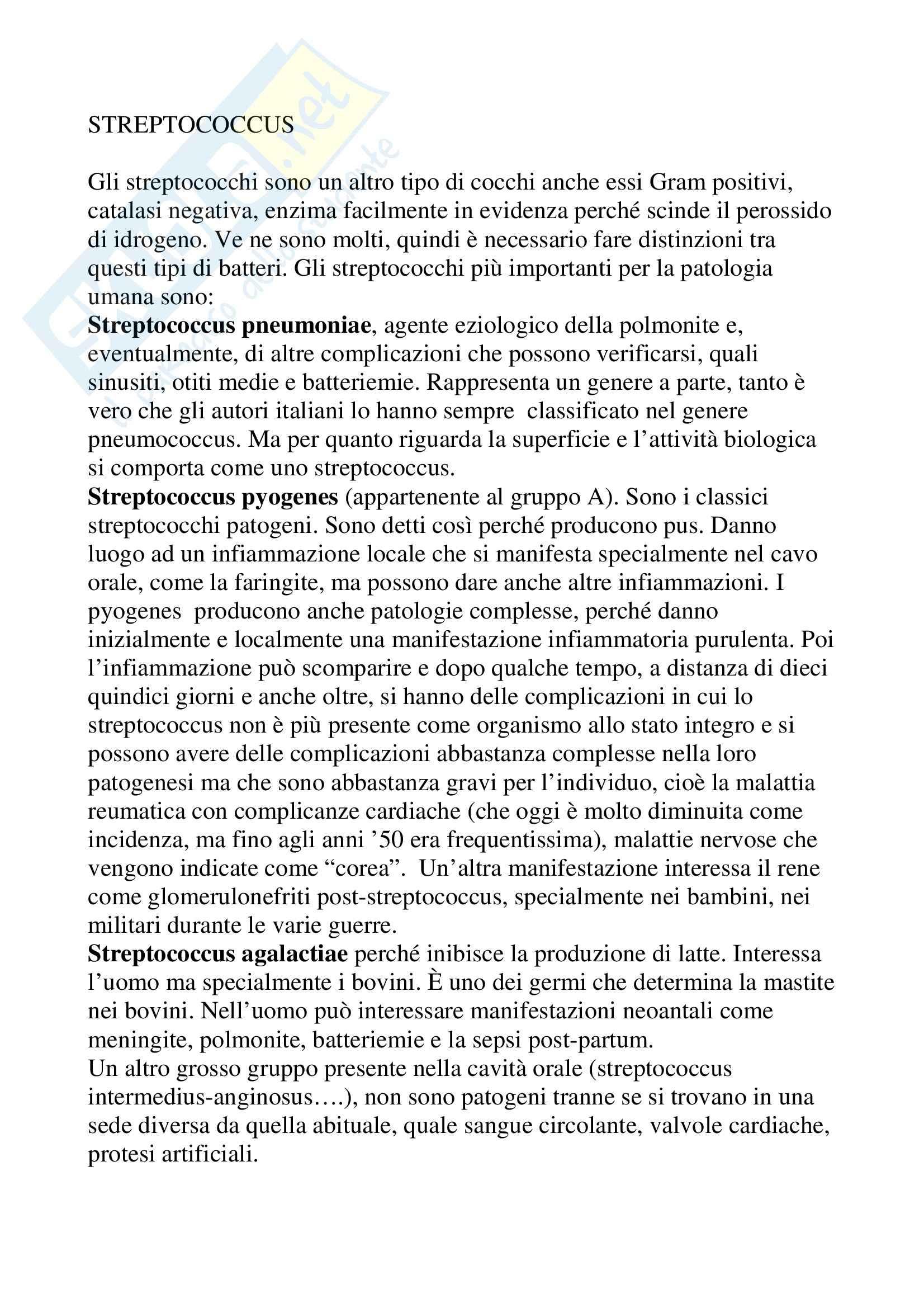 Microbiologia - streptococchi