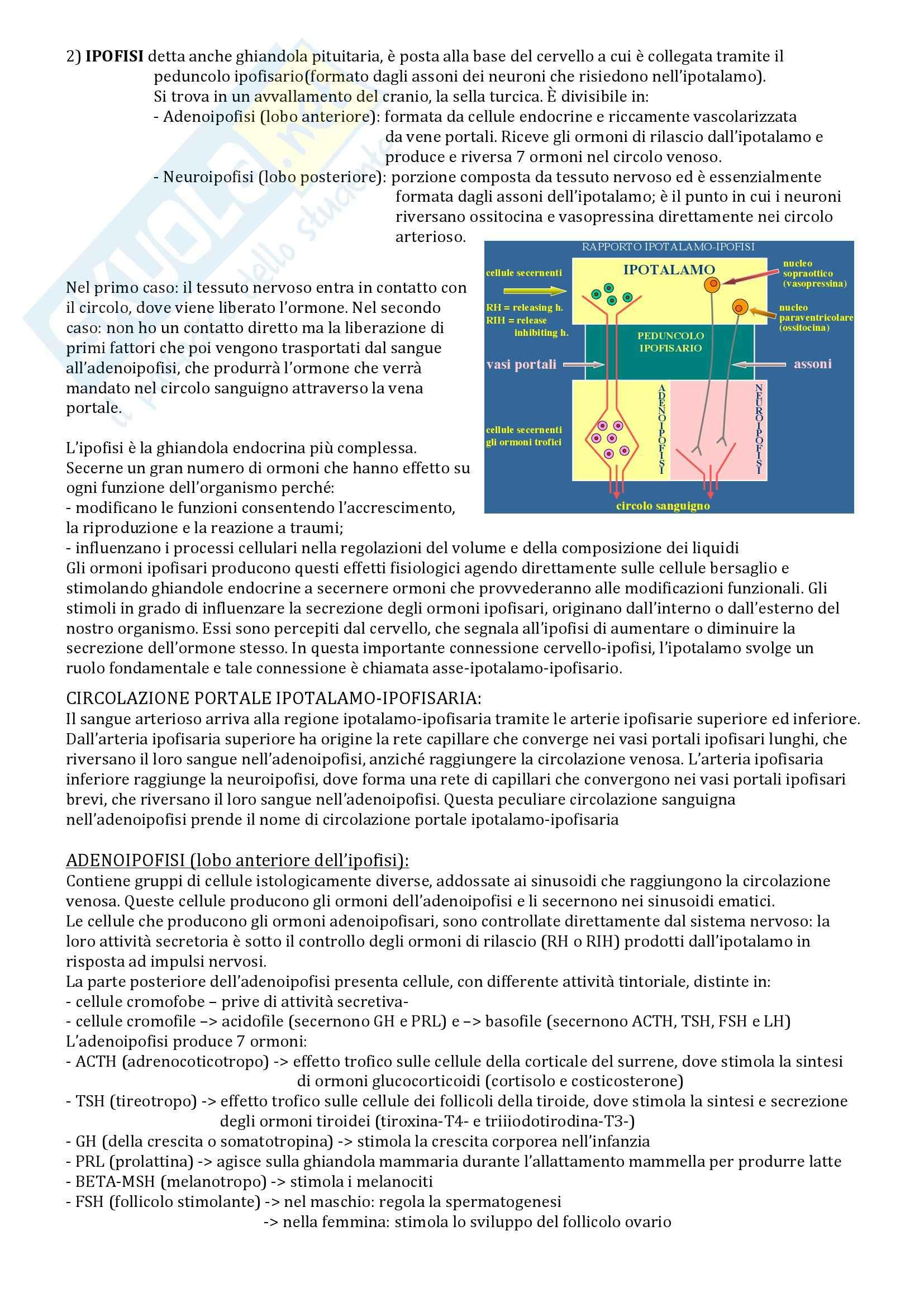 Fisiologia, Sistema endocrino Pag. 6