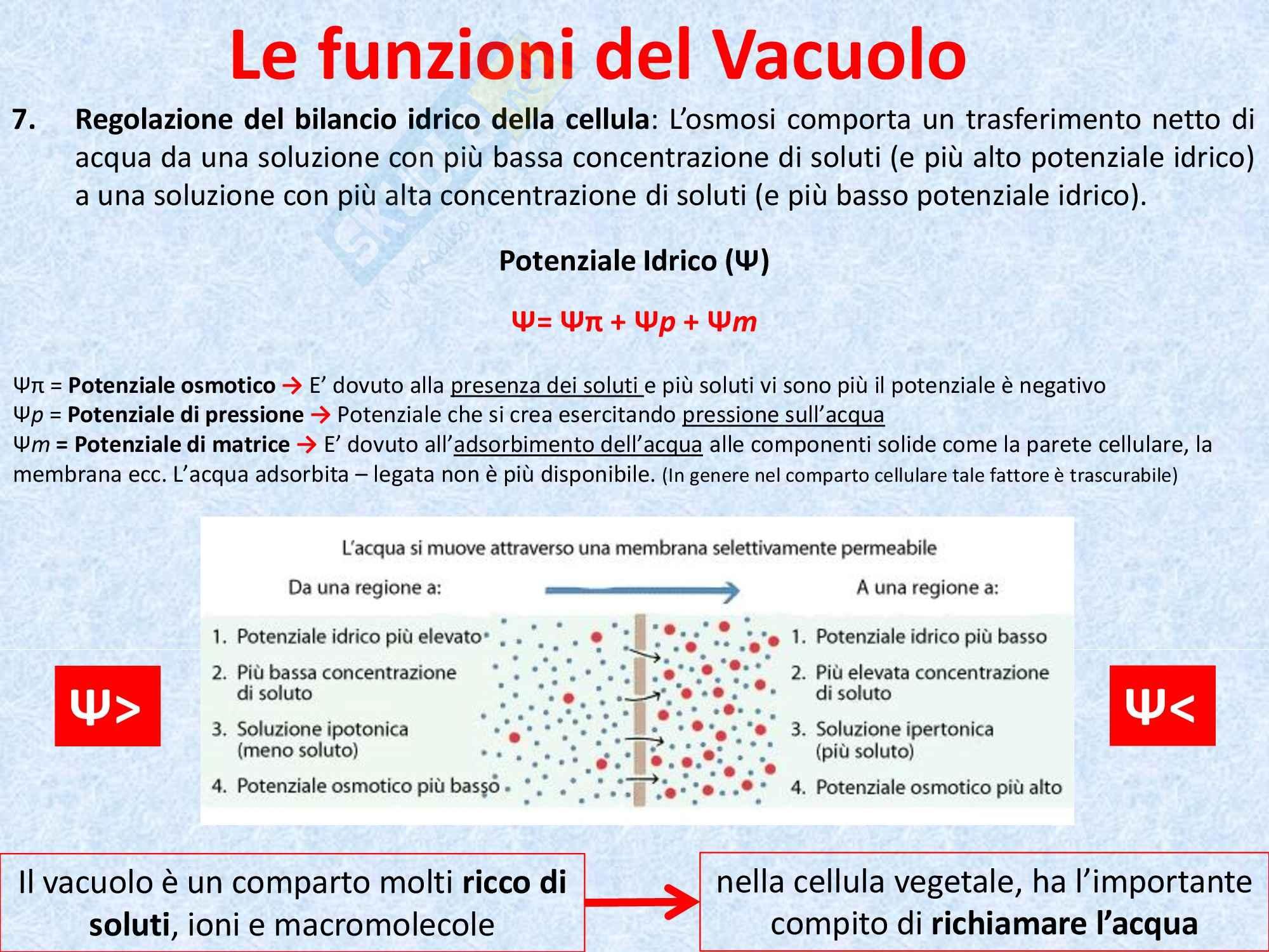 Biologia vegetale - il vacuolo Pag. 11
