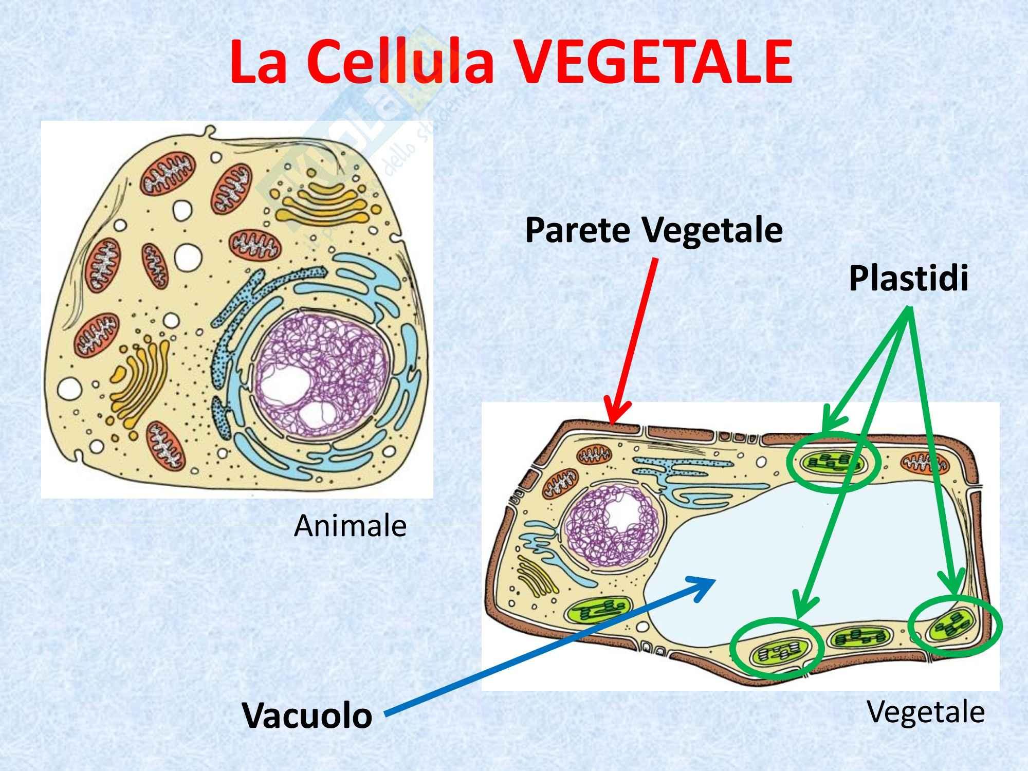 Biologia vegetale - il vacuolo Pag. 2