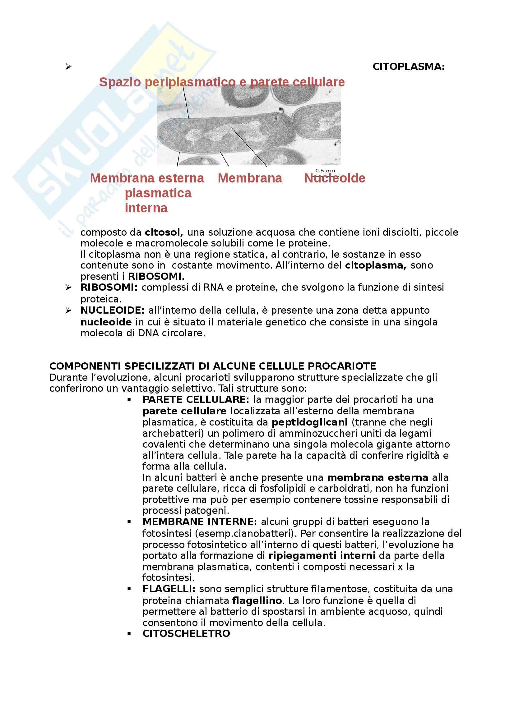 Riassunto esame Biologia umana, prof. Barbieri, libro consigliato La cellula, edizioni Zanichelli Pag. 6