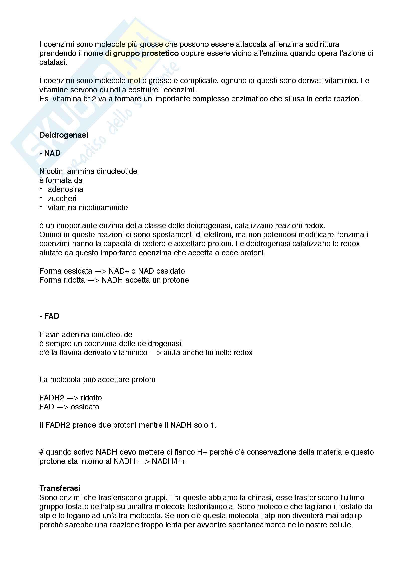 Enzimi e regolazione enzimatica Pag. 2