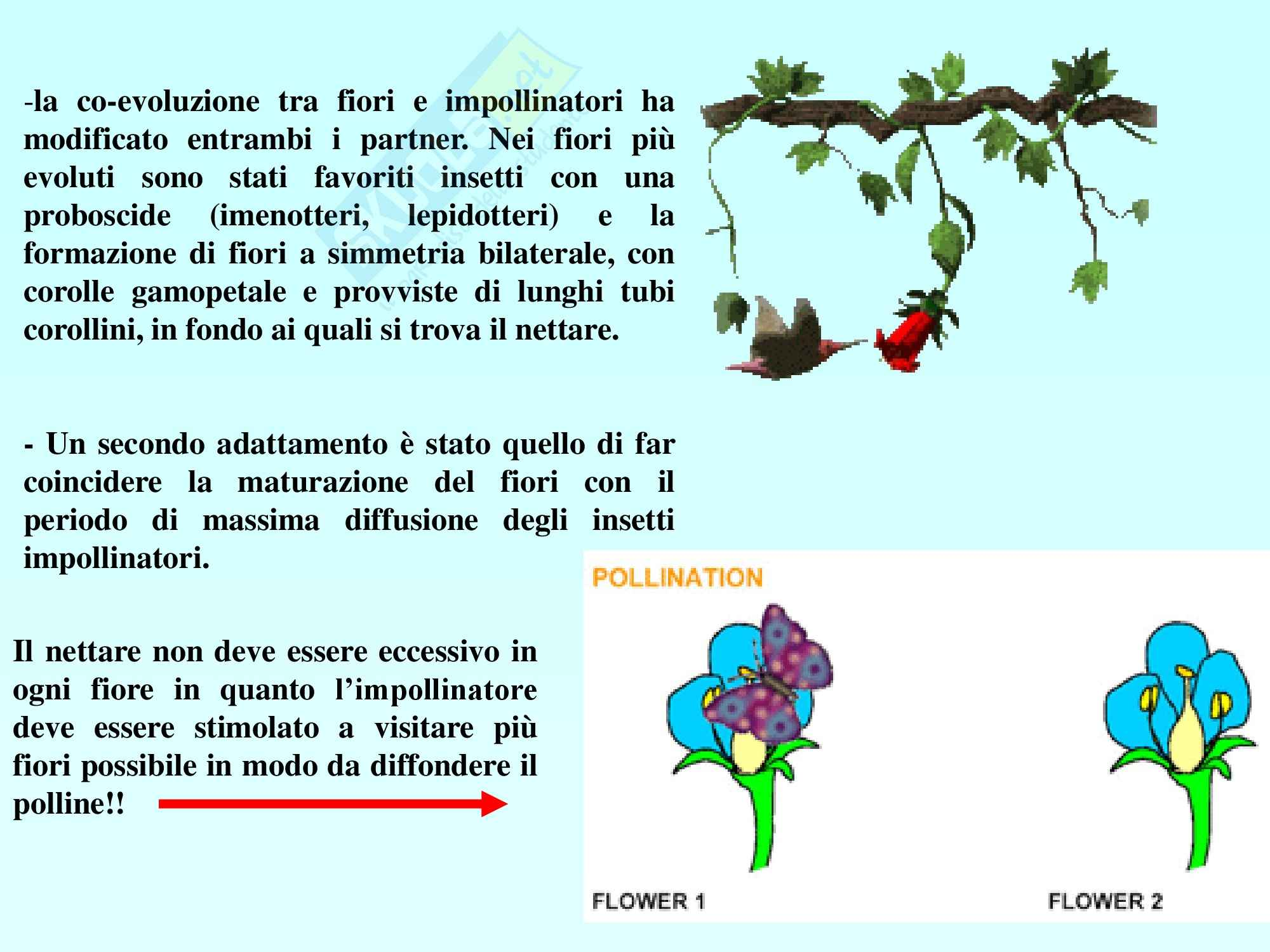 Biologia vegetale - angiosperme Pag. 36