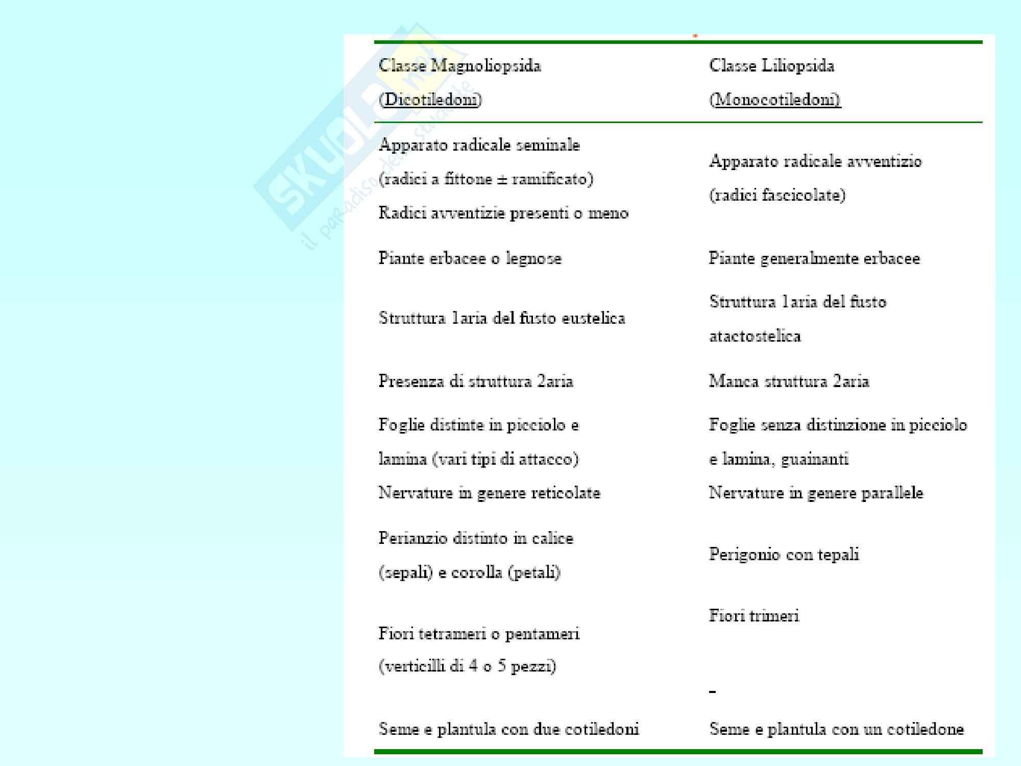 Biologia vegetale - angiosperme Pag. 41