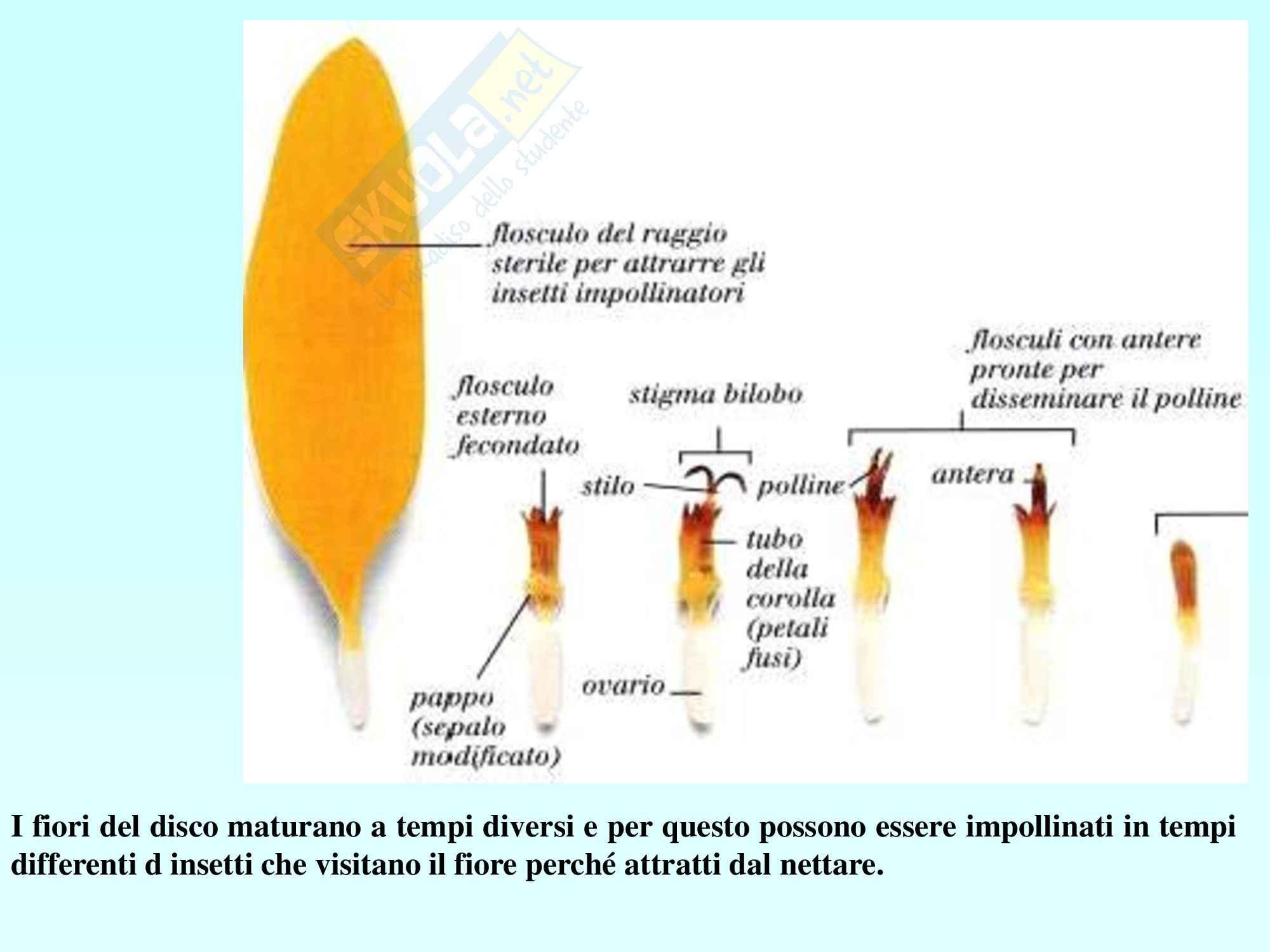 Biologia vegetale - angiosperme Pag. 46