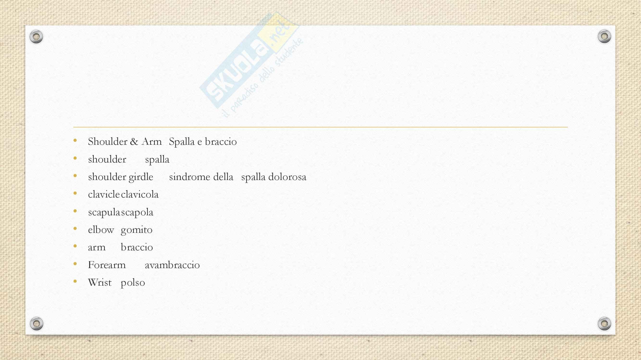 Inglese - Termini anatomici Pag. 11
