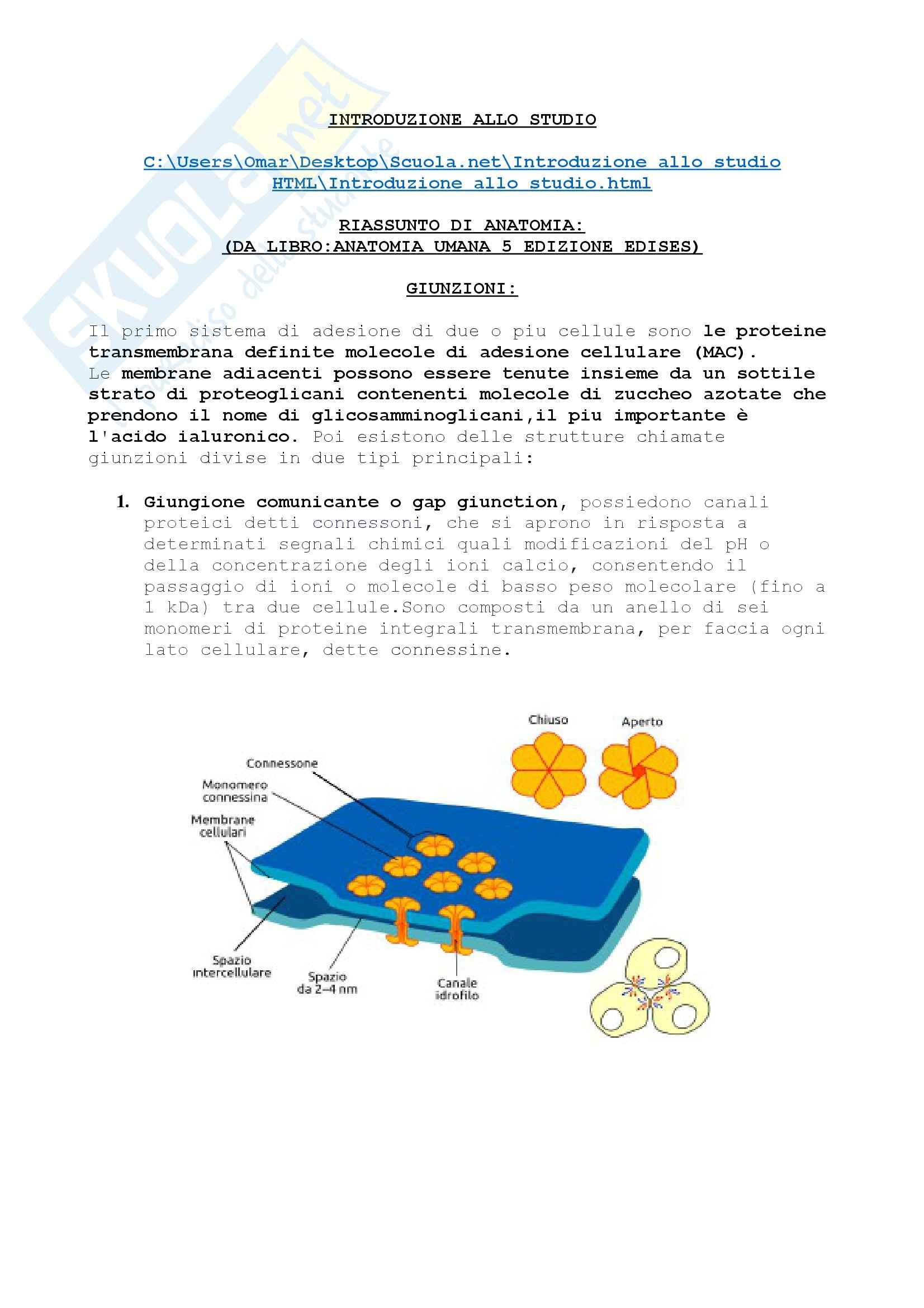 Riassunto esame Anatomia, prof. Rumio, libro consigliato Anatomia Umana, Martini, Timmons, Tallitsch