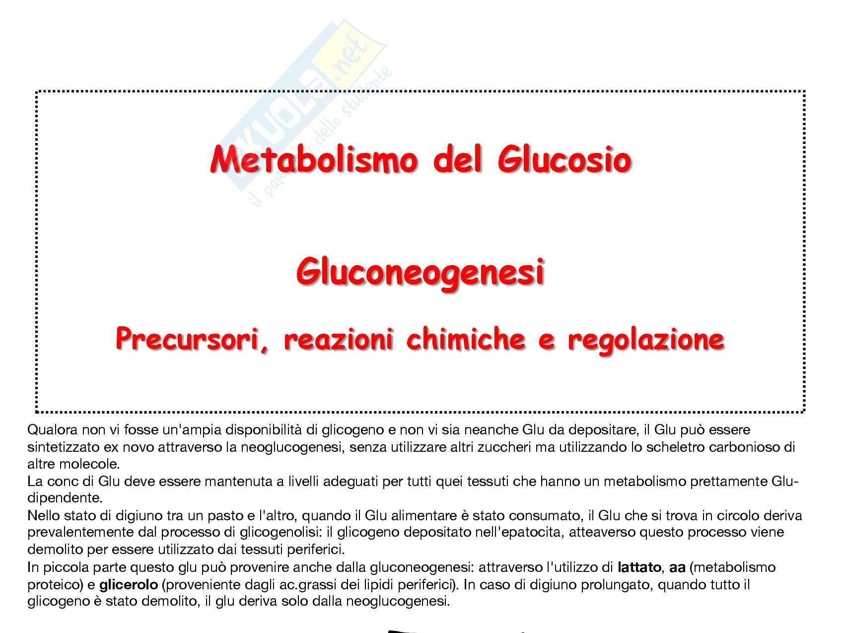 8 Gluconeogenesi, precursori, reazioni chimiche, regolazione e funzioni