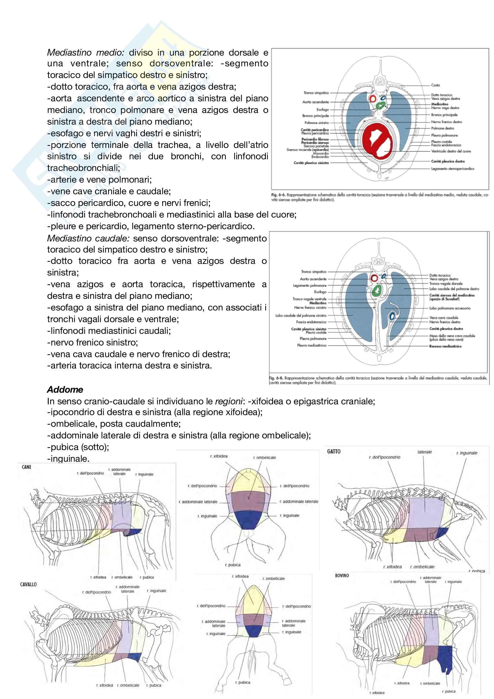 Anatomia topografica Pag. 21