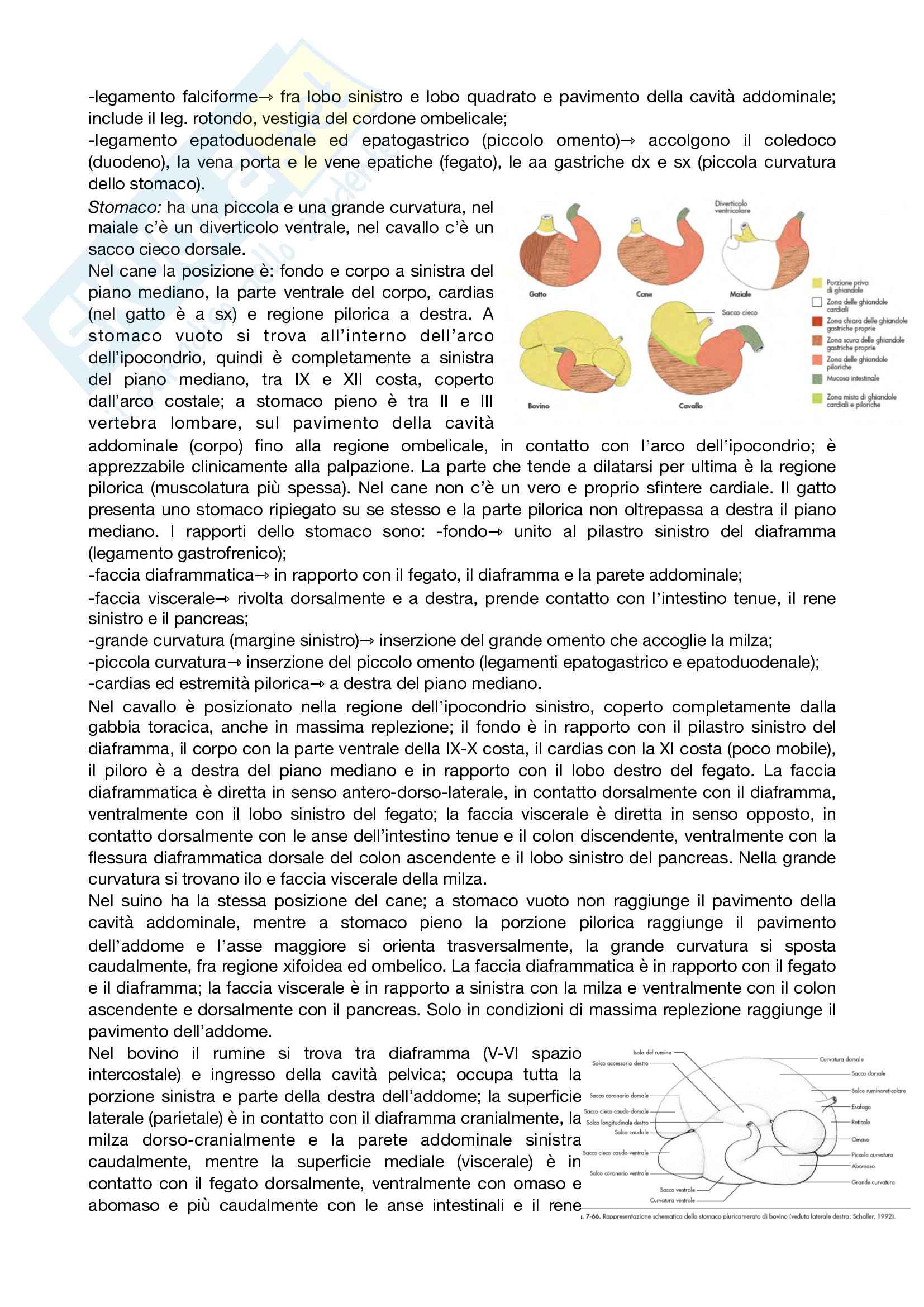 Anatomia topografica Pag. 26