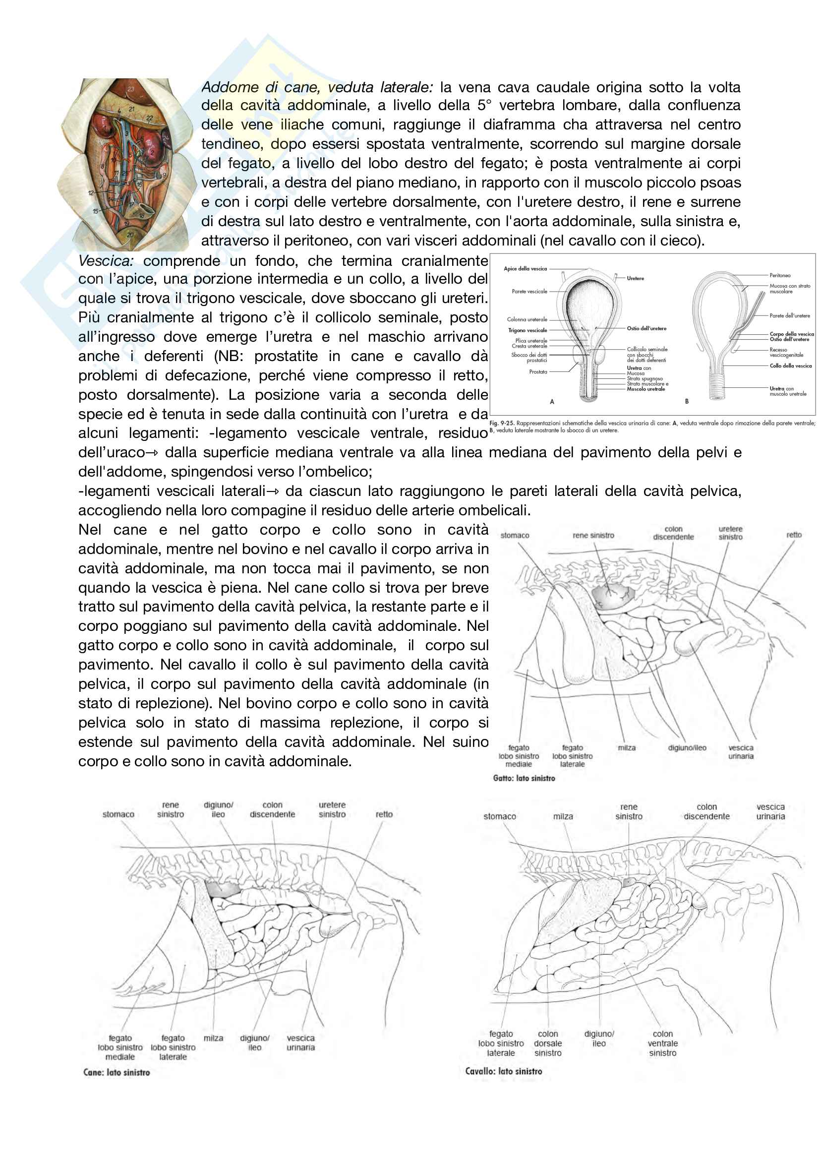 Anatomia topografica Pag. 31