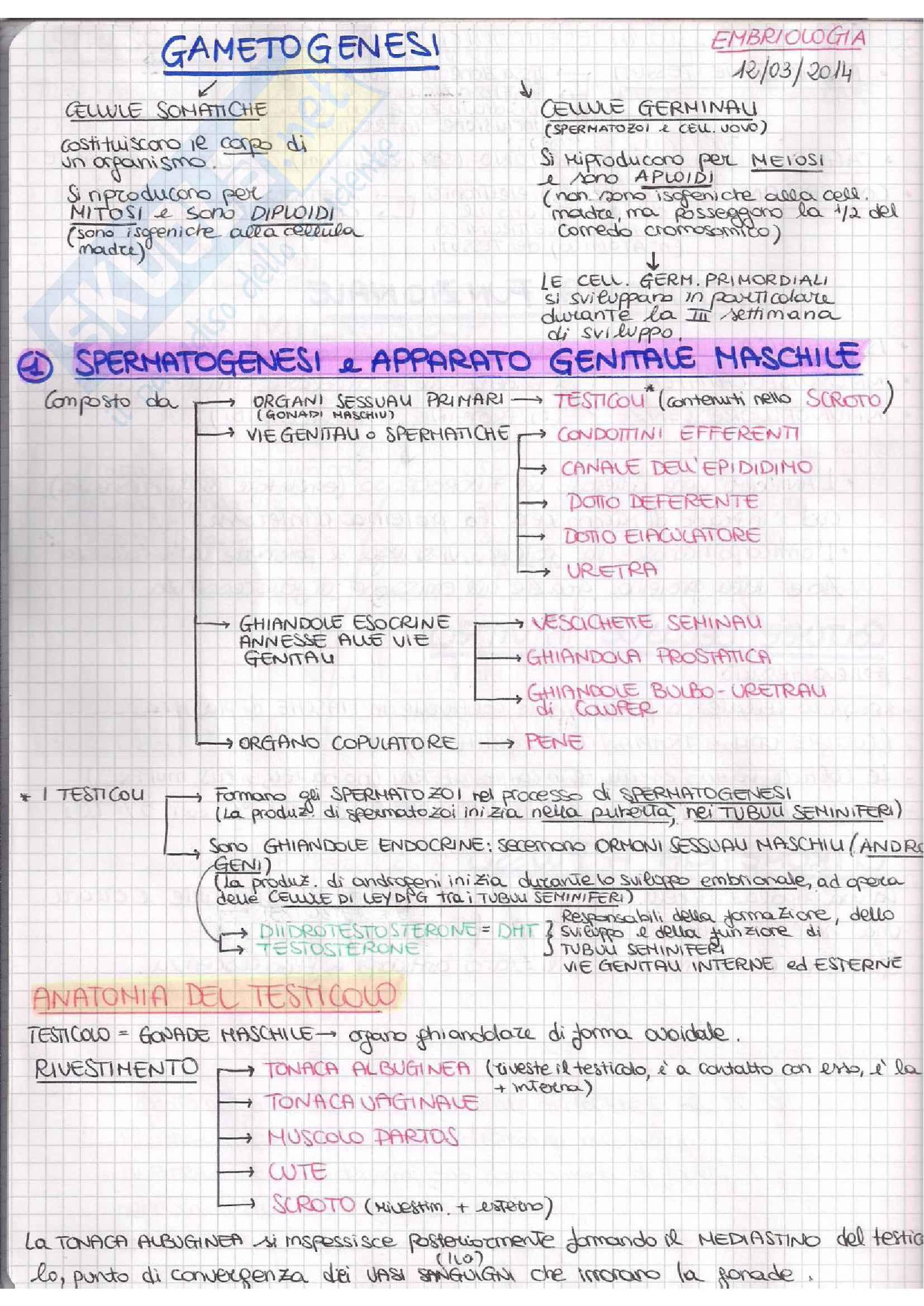 appunto C. Nervi Istologia e embriologia