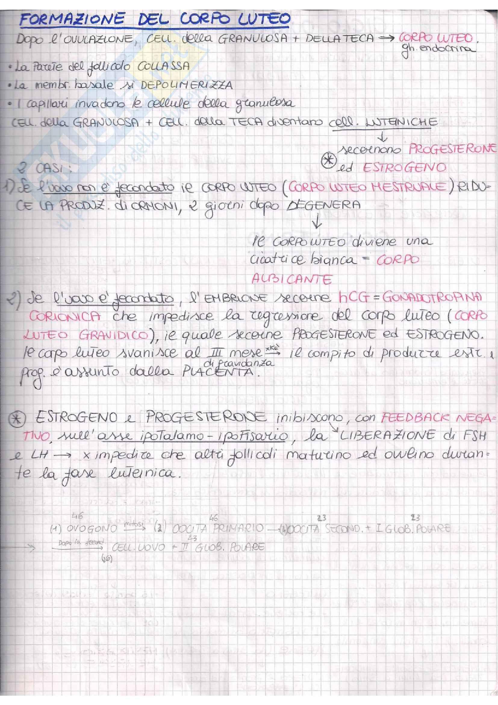 Embriologia Pag. 11