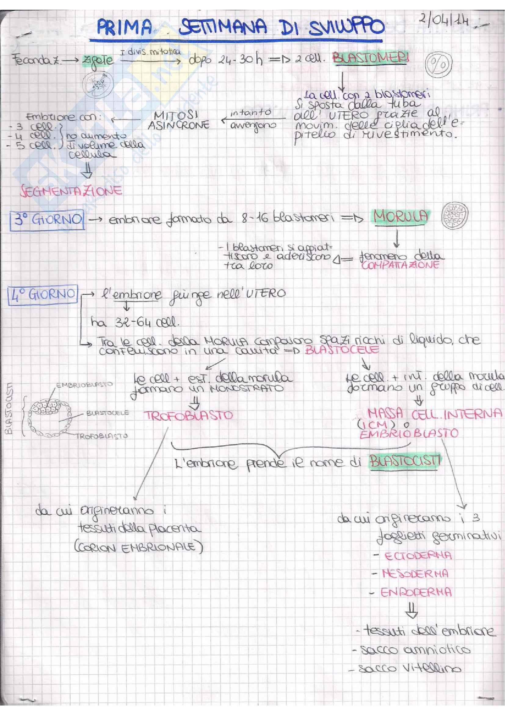 Embriologia Pag. 21