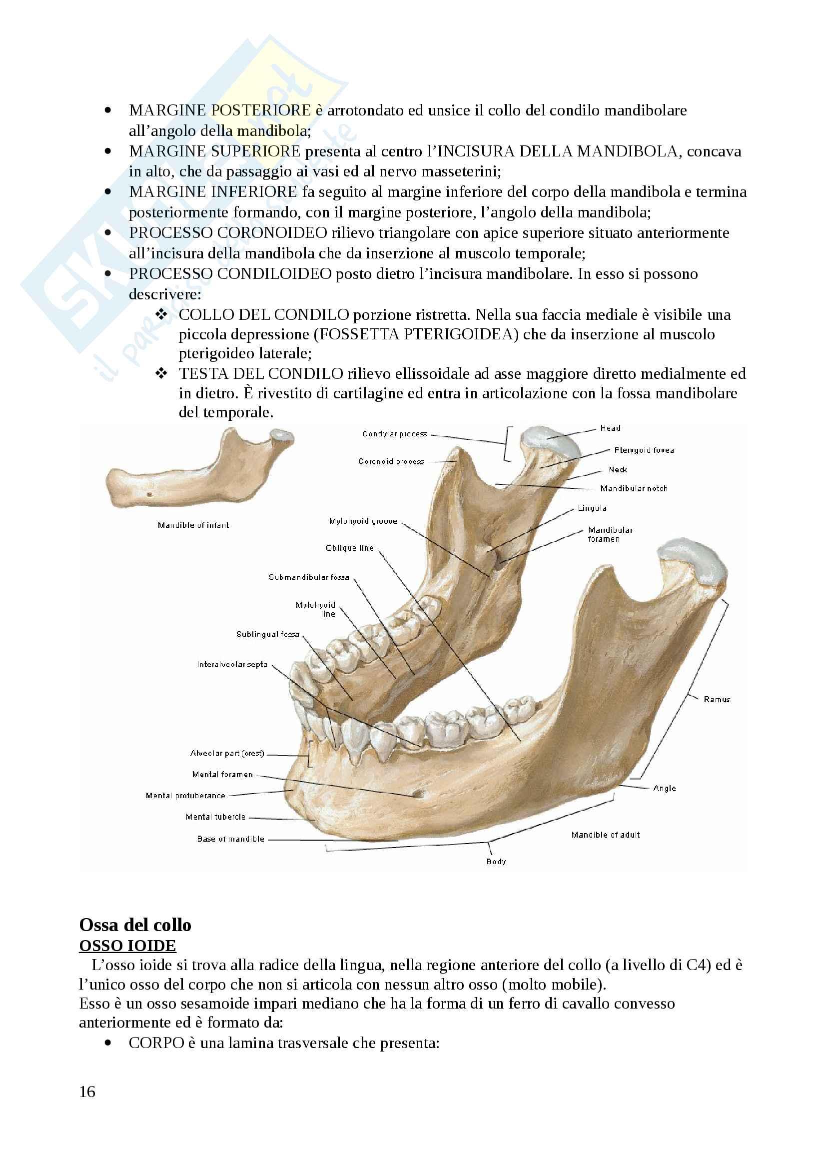Apparato scheletrico Pag. 16