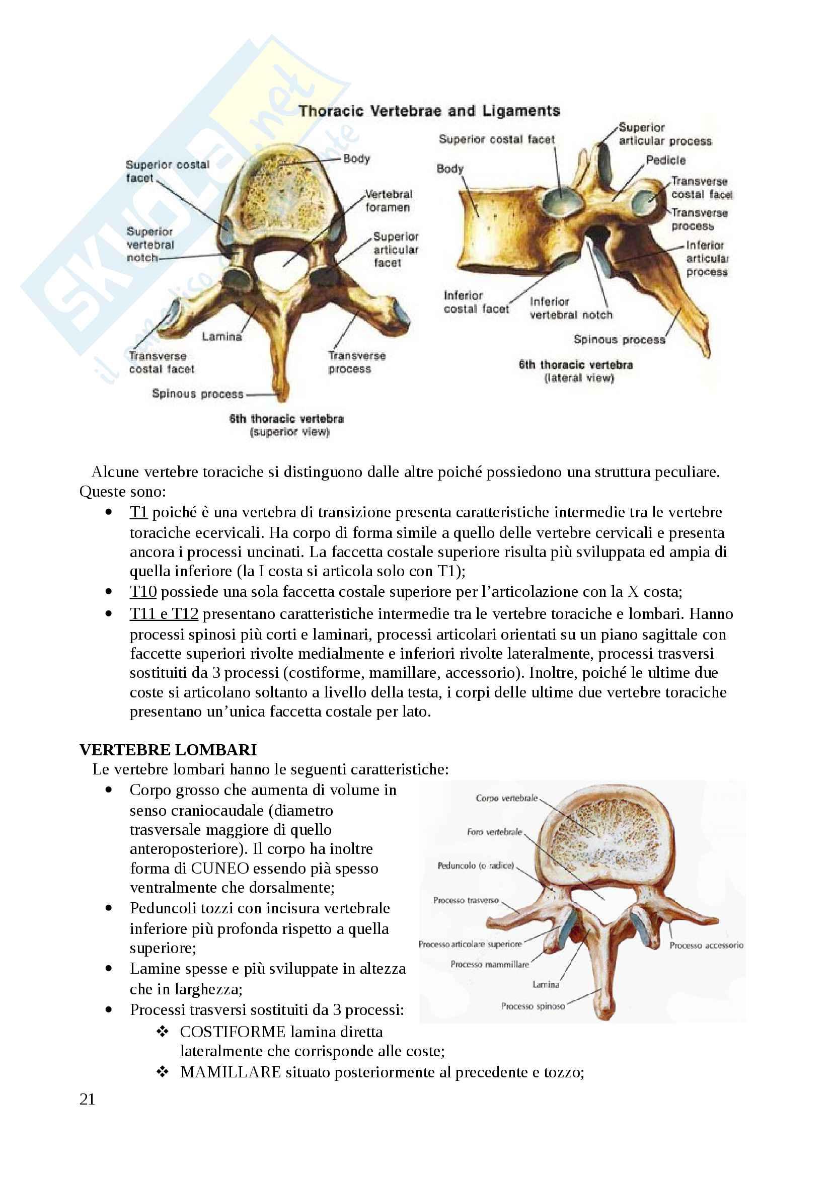 Apparato scheletrico Pag. 21