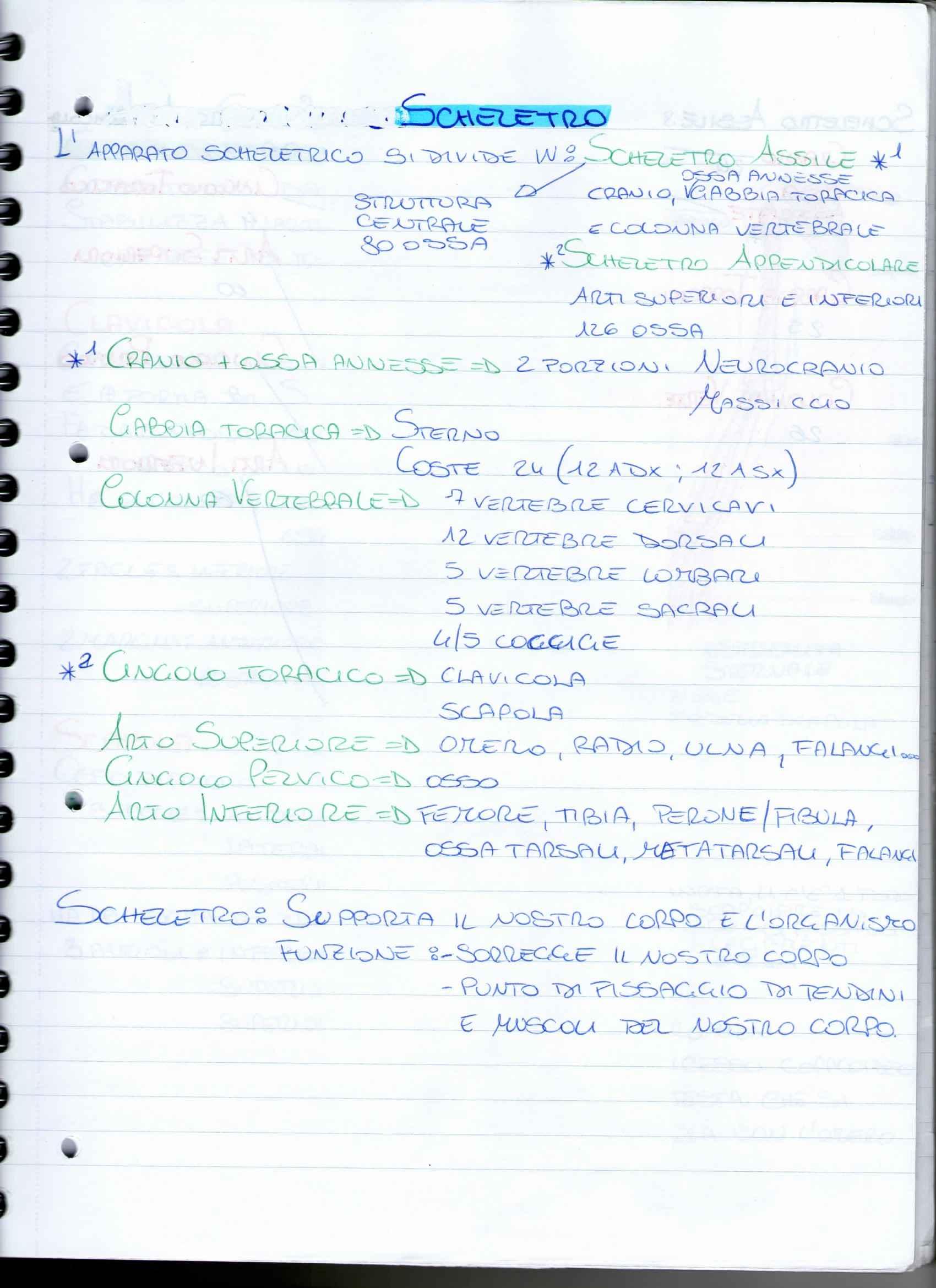 Riassunto esame Anatomia Umana, apparato scheletrico, prof. Ripani, libro consigliato Anatomia umana di Martini, Timmons e Tallitsch