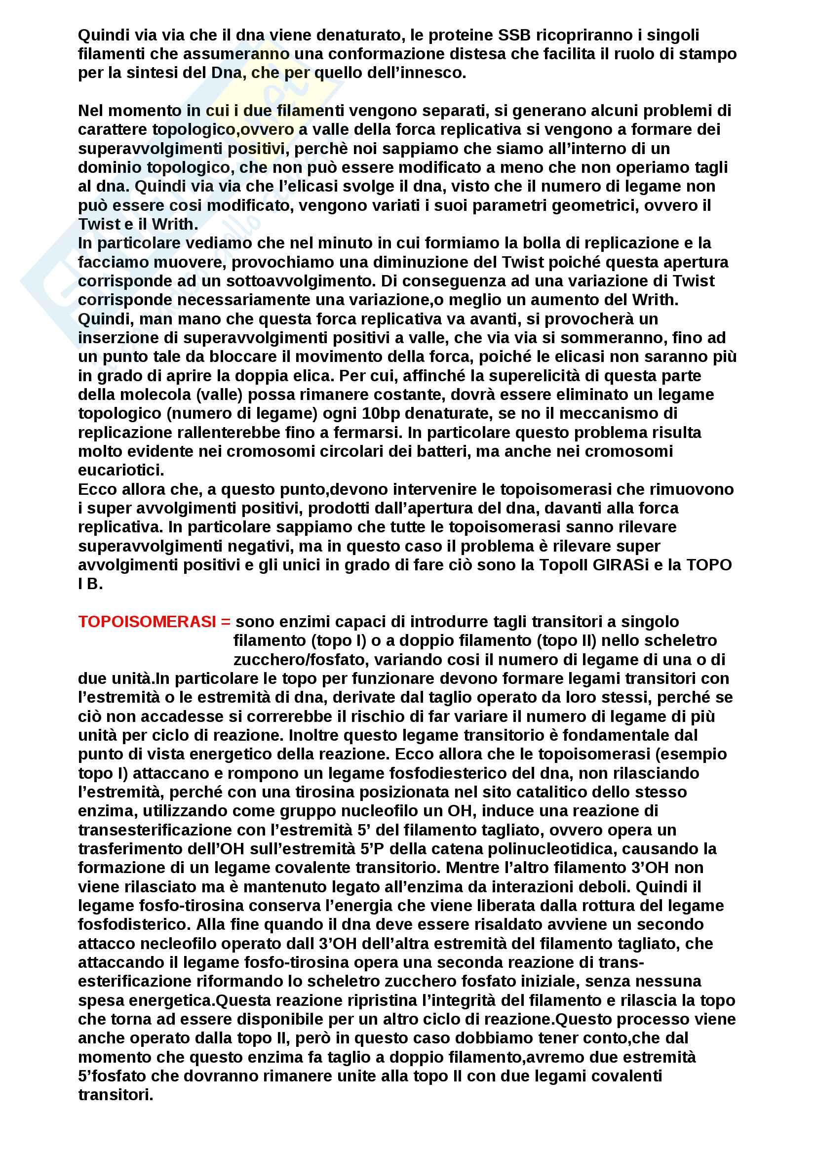 replicazione procarioti ed eucarioti Pag. 16