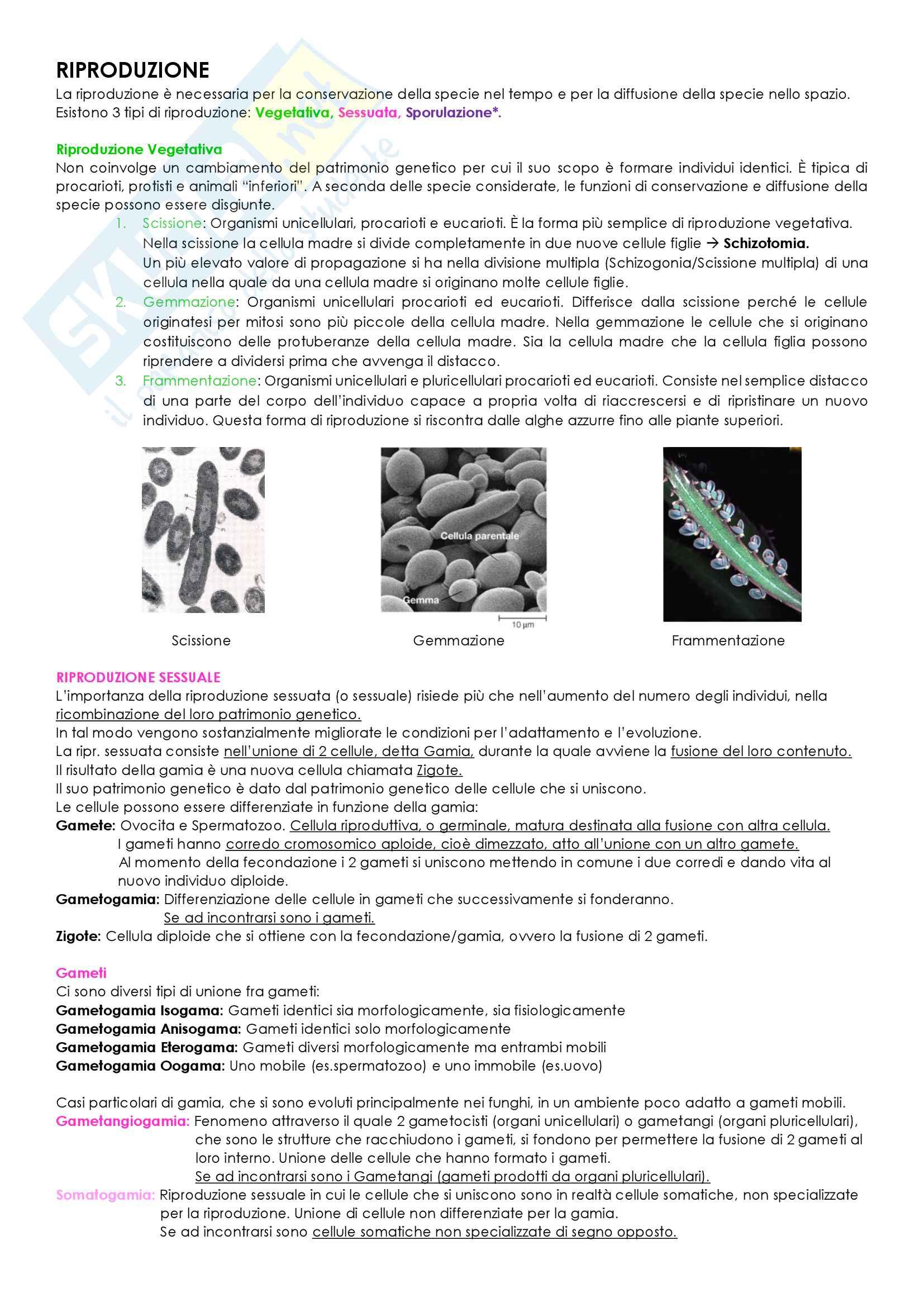 Biologia Vegetale Pag. 11