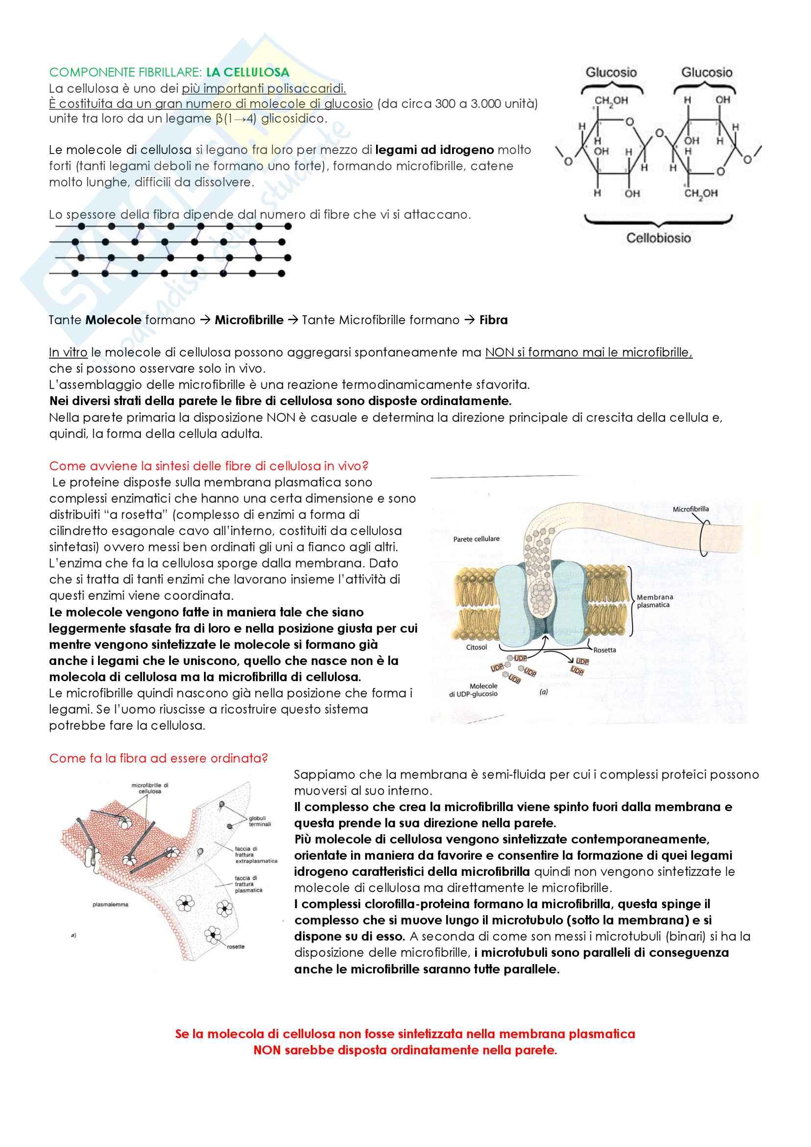 Biologia Vegetale Pag. 2