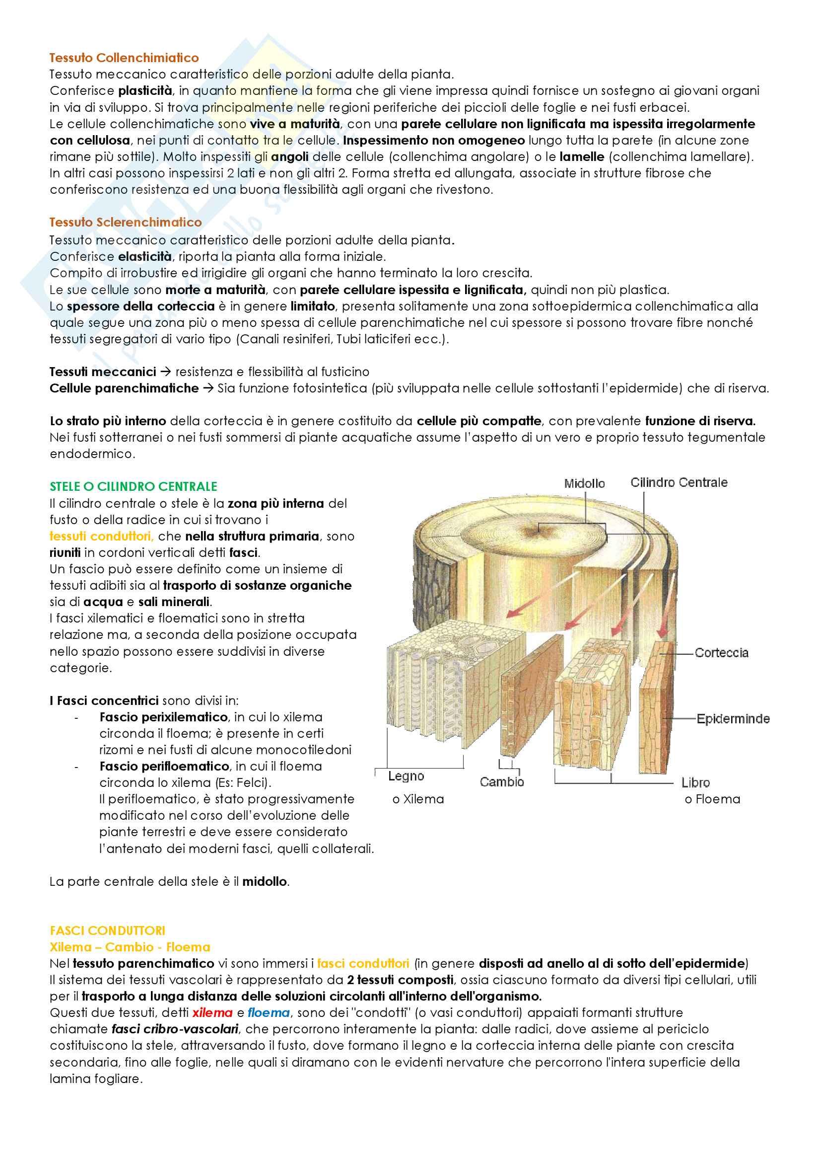 Biologia Vegetale Pag. 26